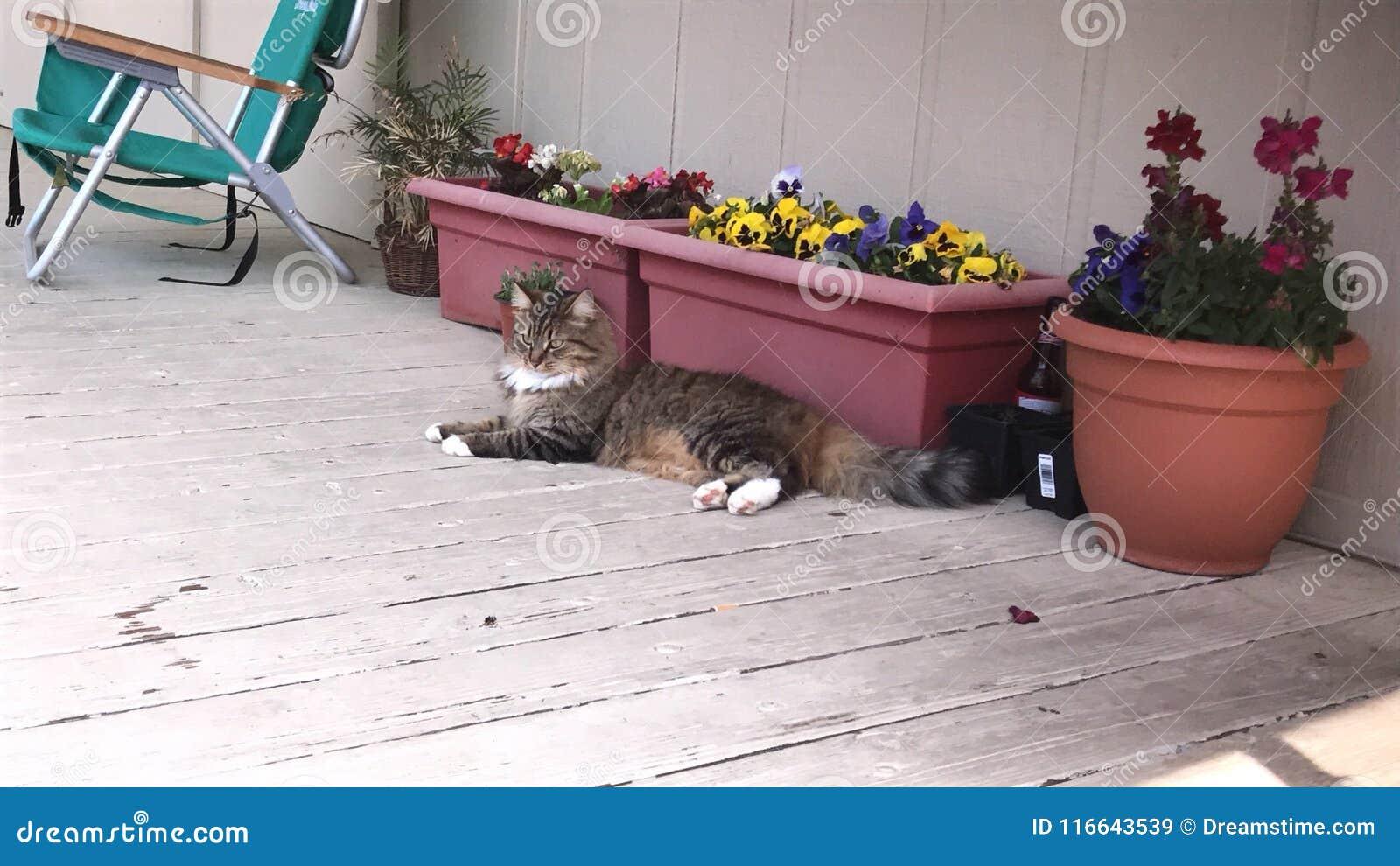 Кот на ее проломе дня