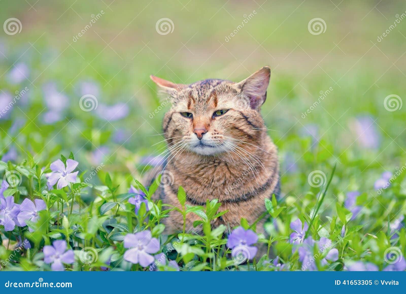 Кот на лужайке барвинка