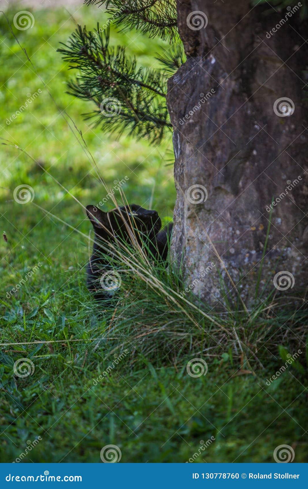 Кот на Prowl