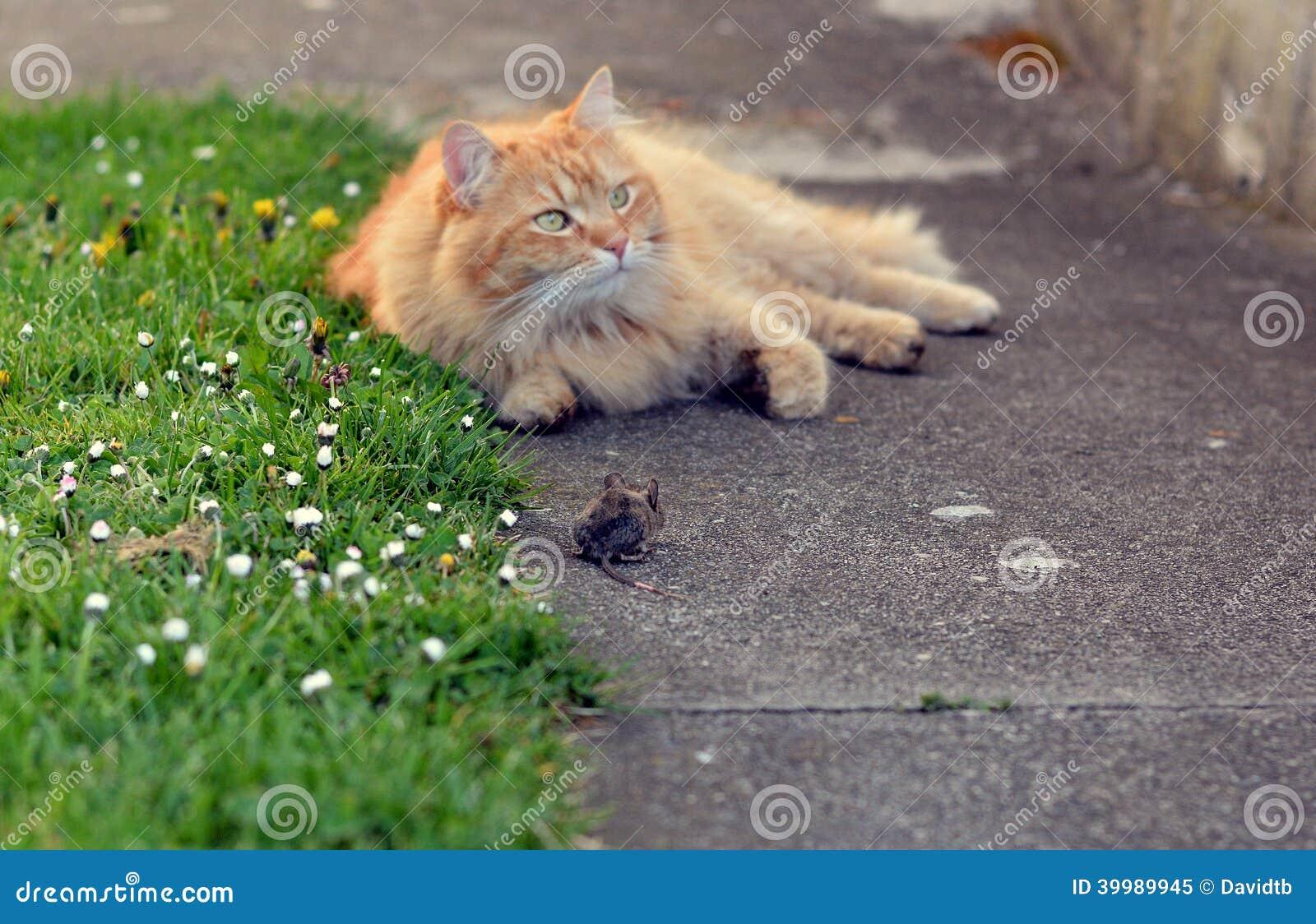 Охота кота на мышь