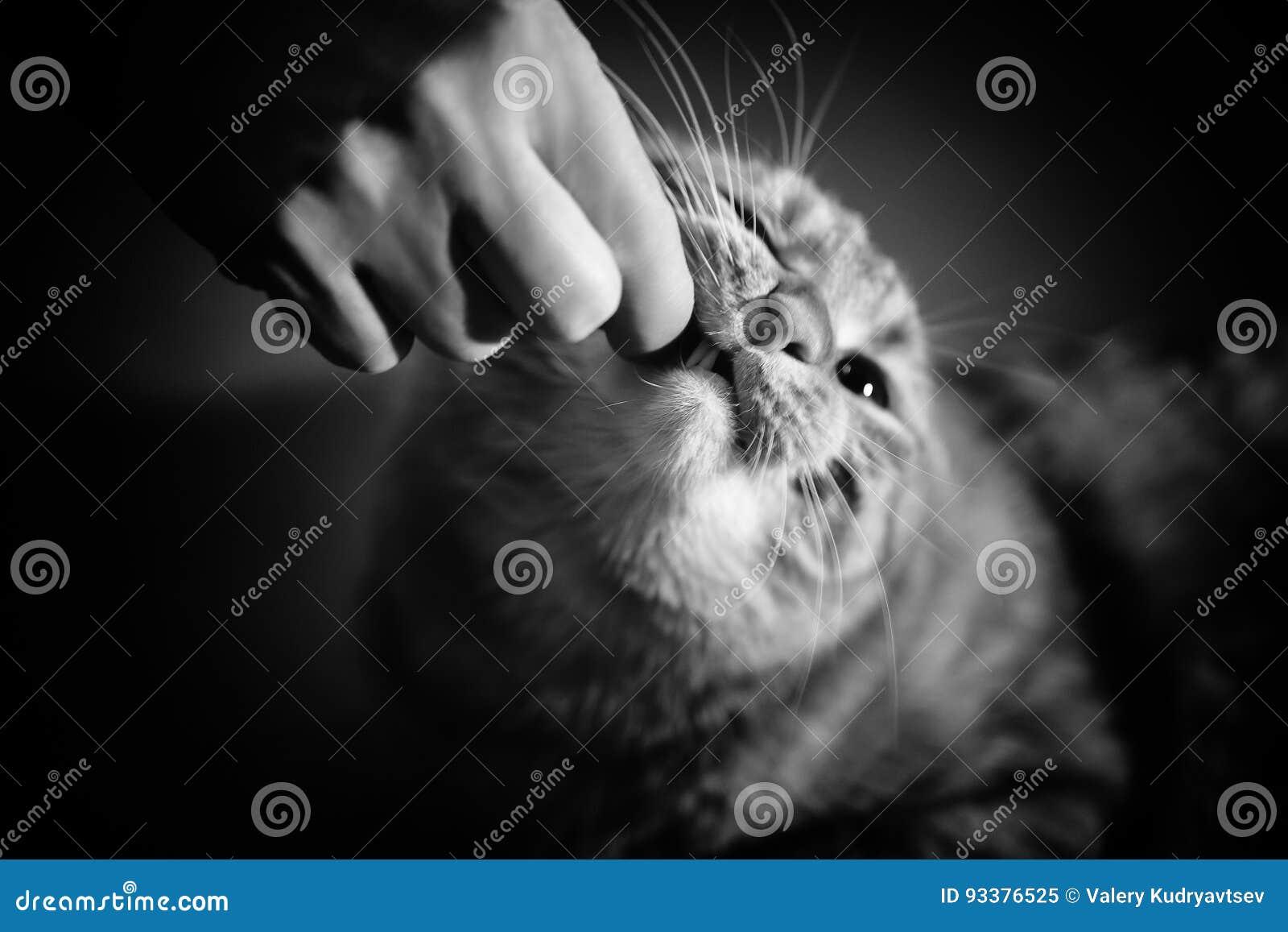 Кот принимает пилюльку