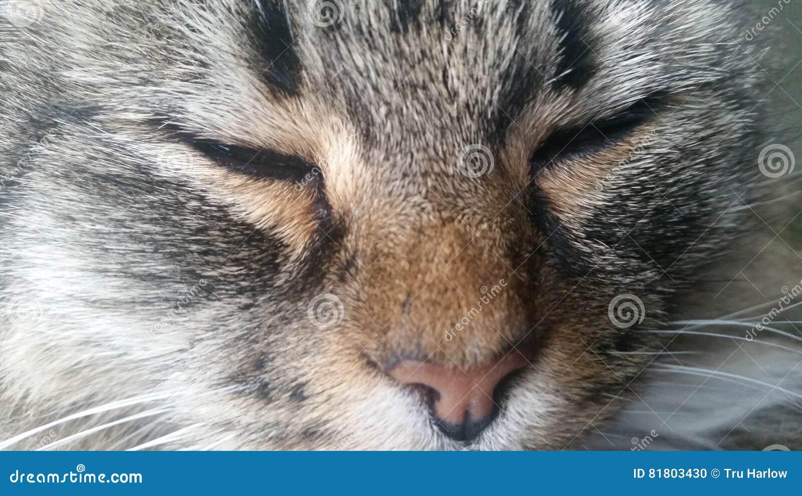 Кот при закрытые глаза