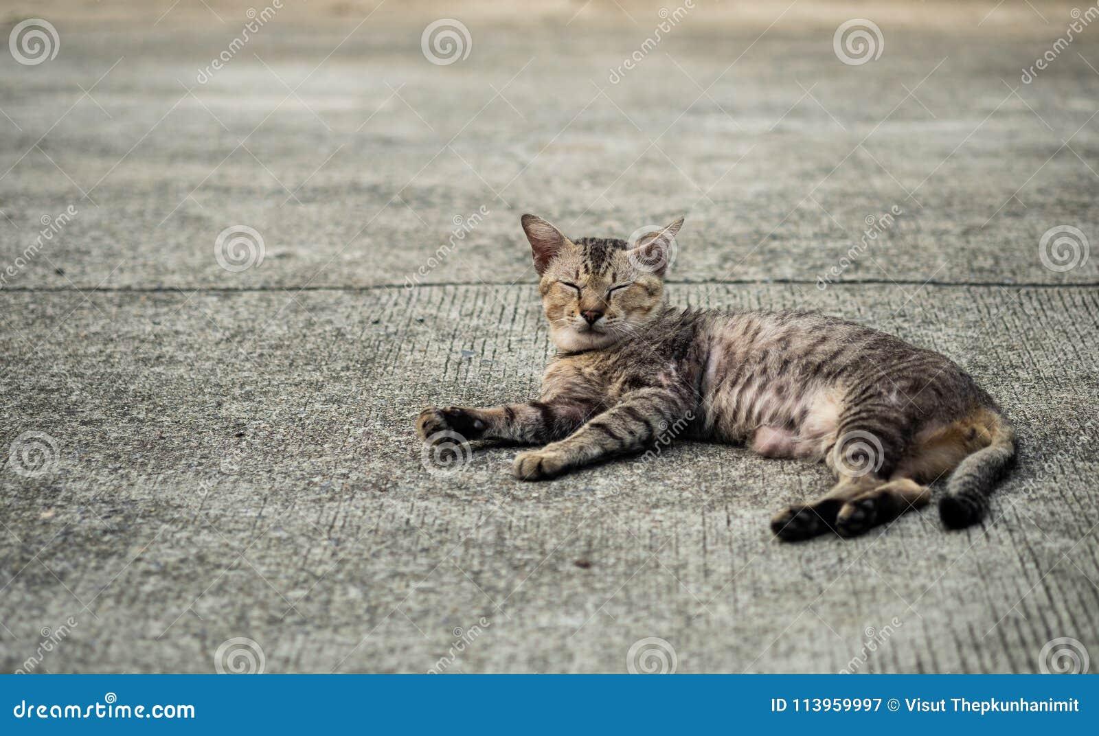 Кот рассеянного tabby милый