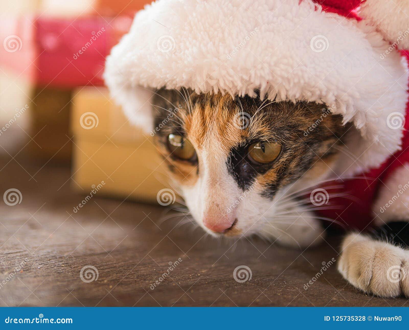 Кот рождества в красной шляпе Санты