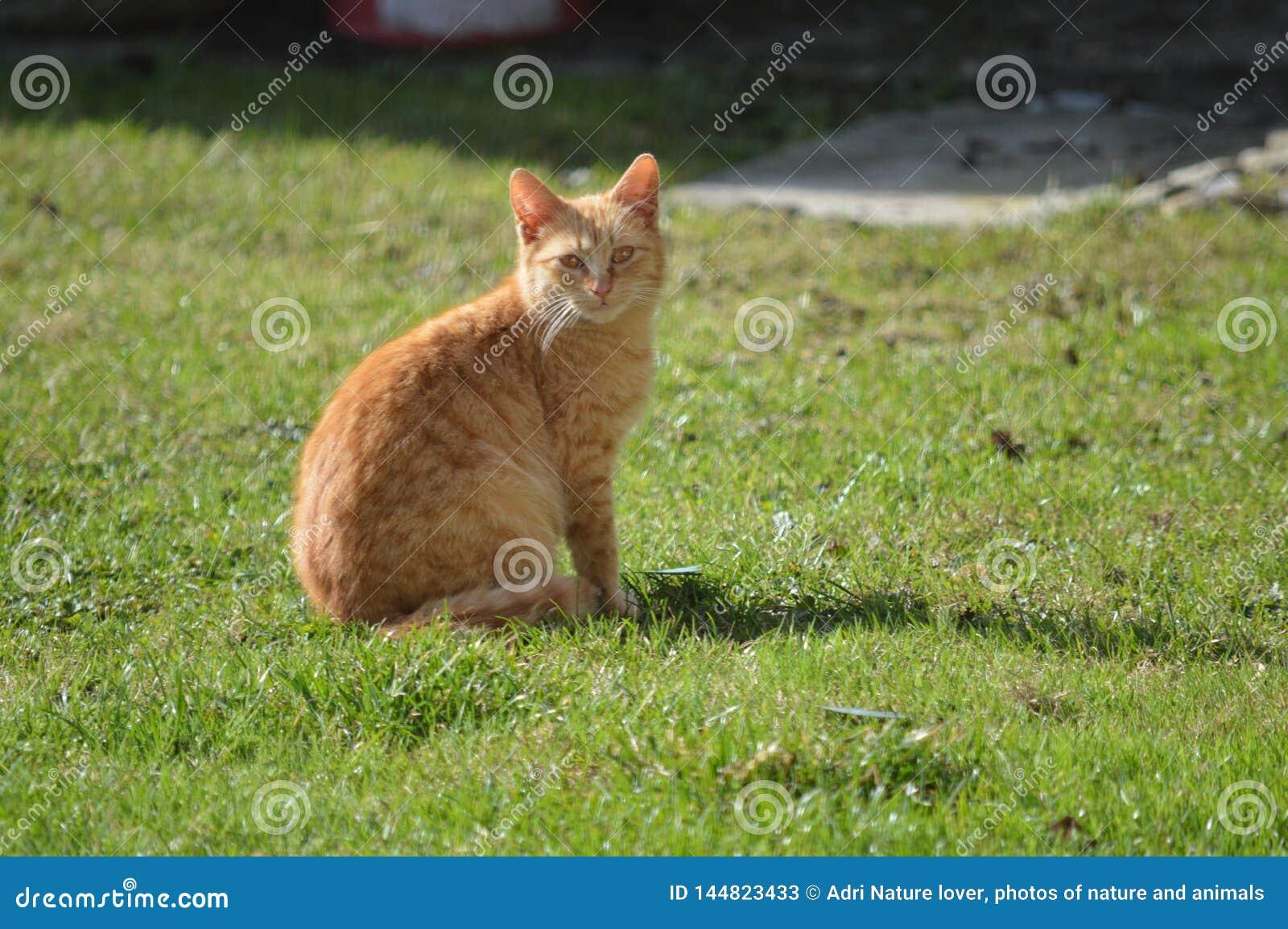 Кот сидя и наблюдая в саде