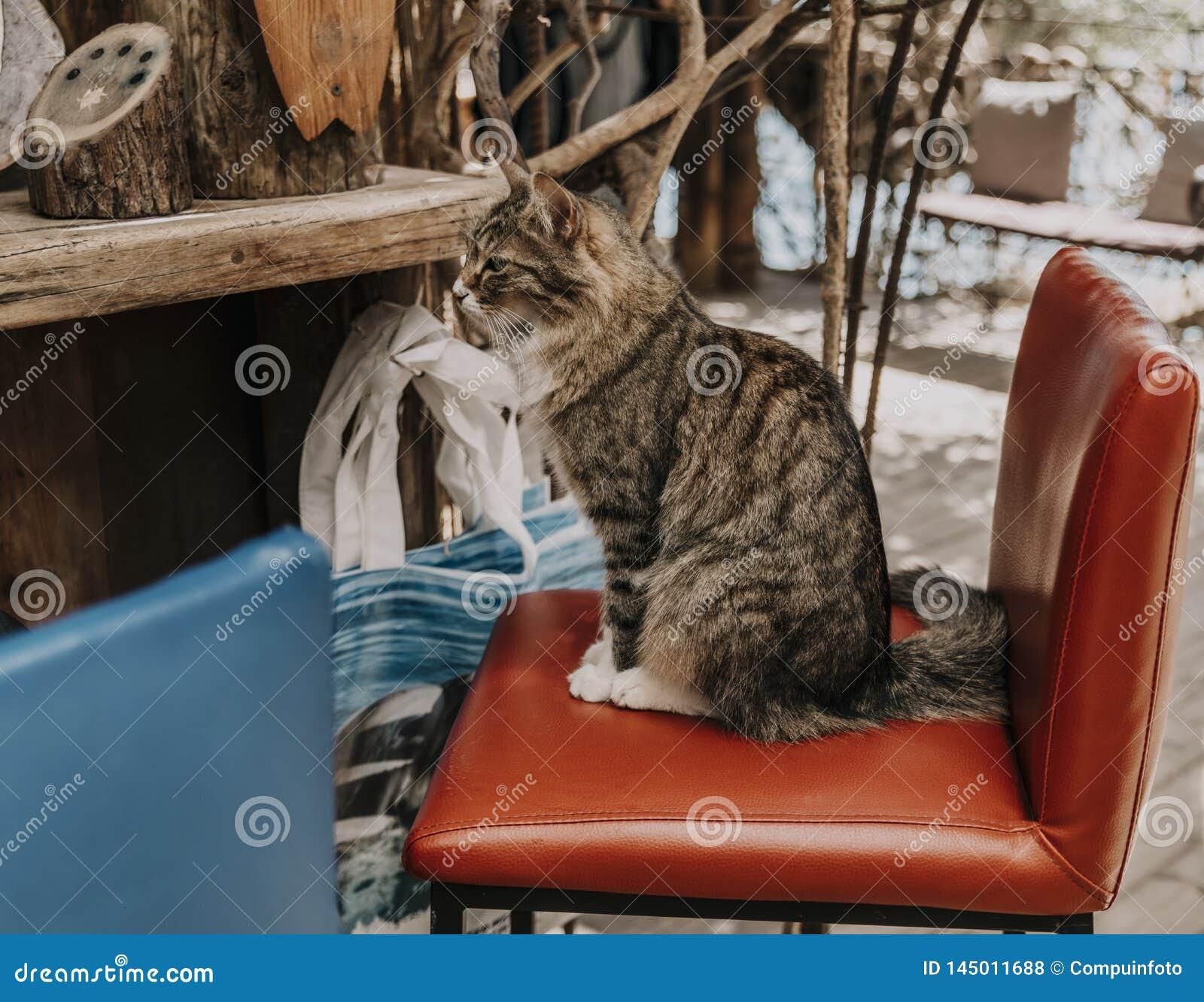 Кот сидя на баре