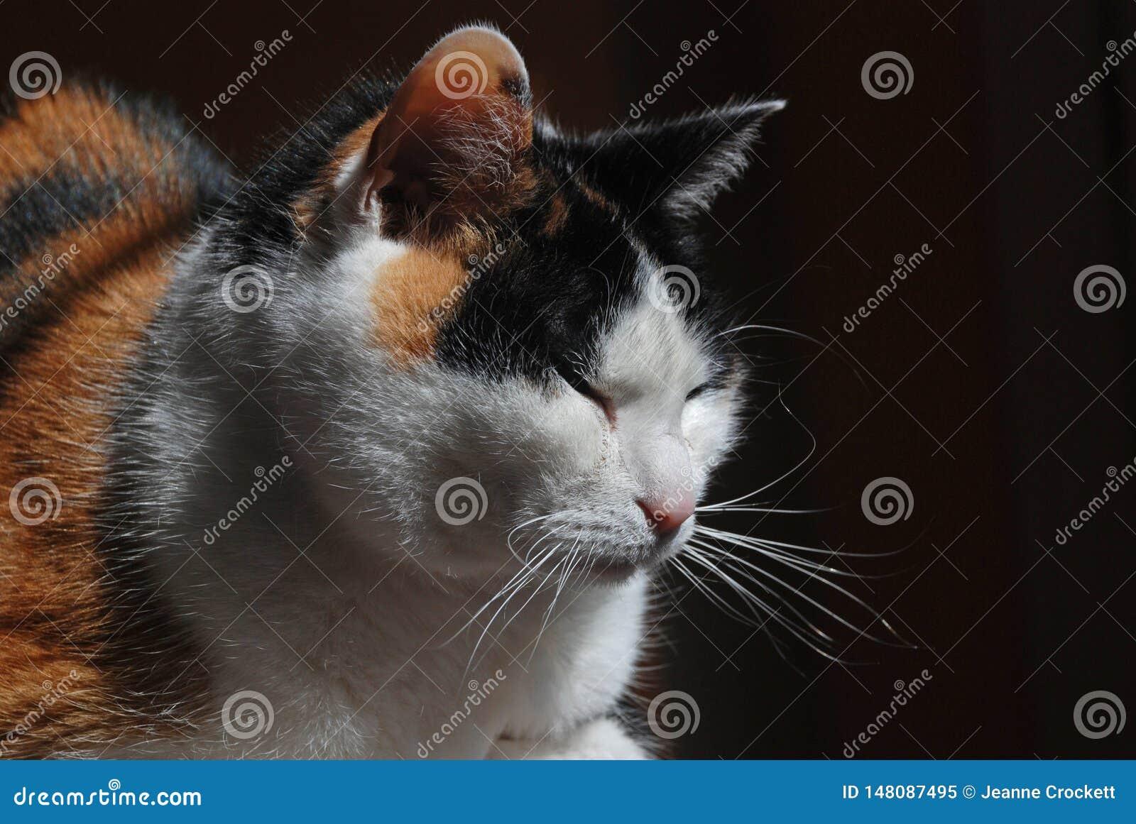 Кот ситца греется в солнечном свете