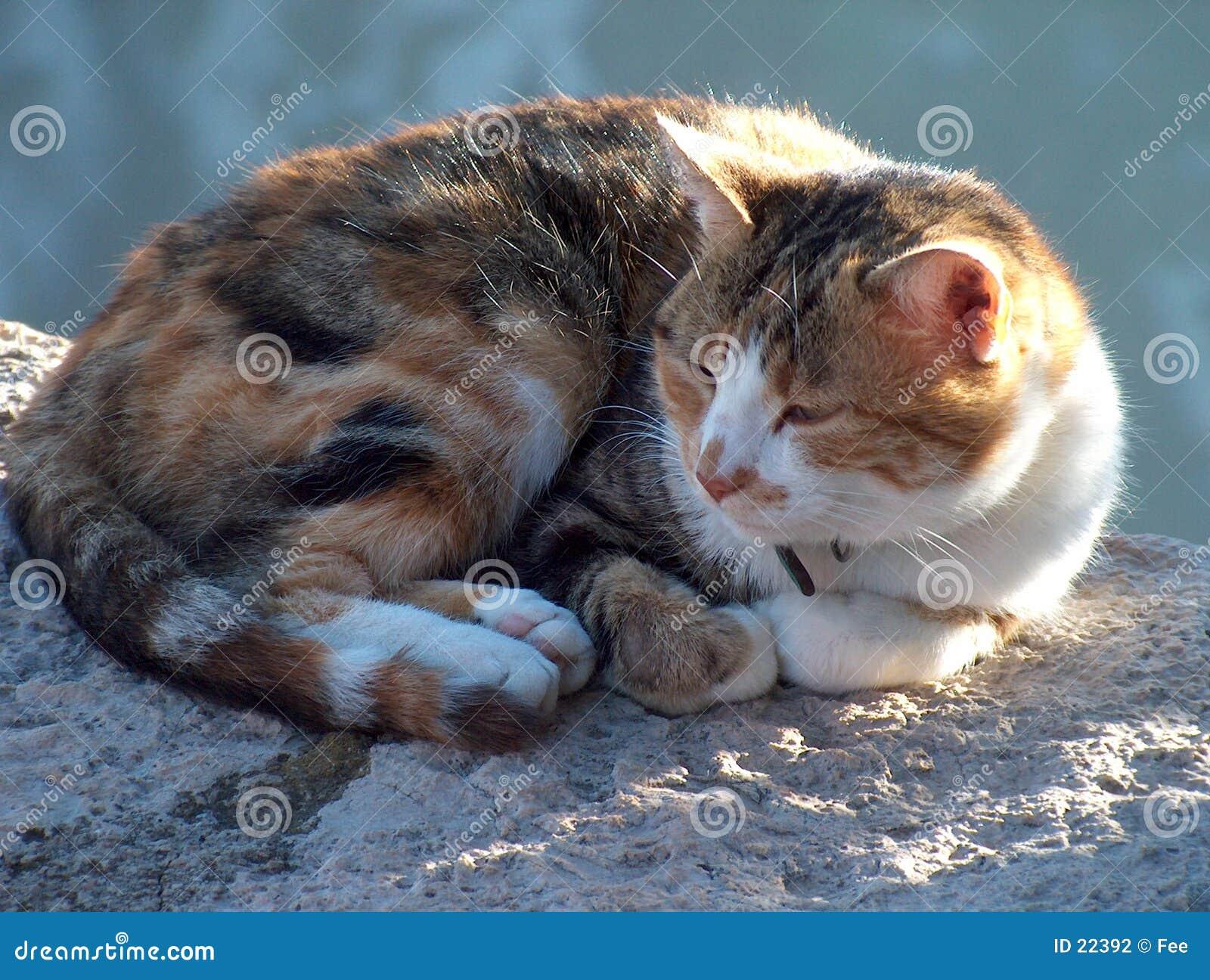 кот сонный