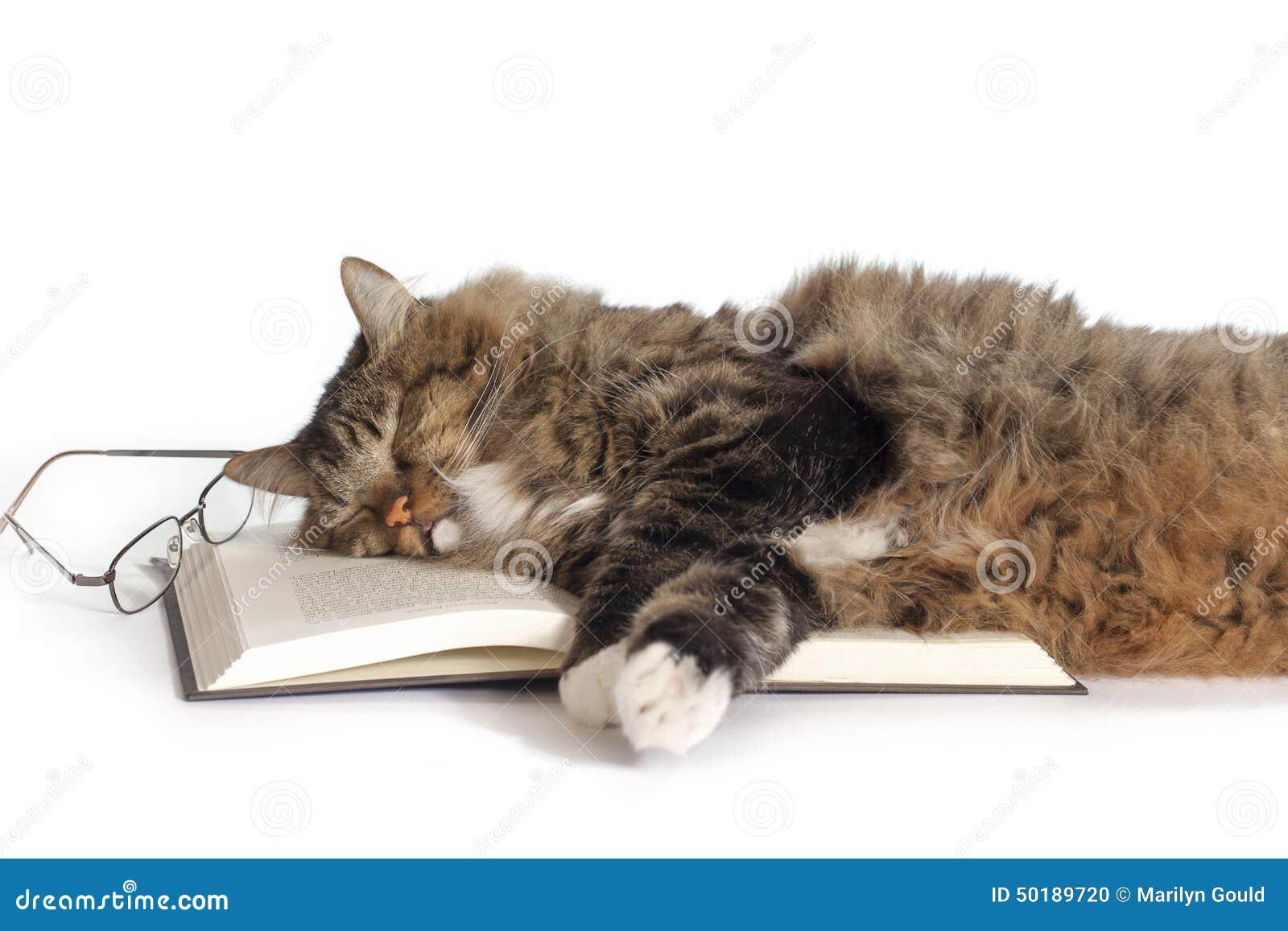 Кот спит у книги