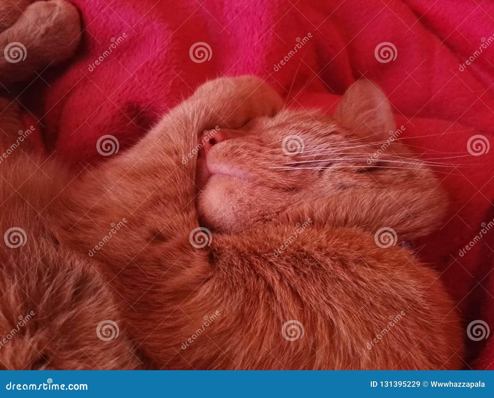 Кот спать на розовой кровати