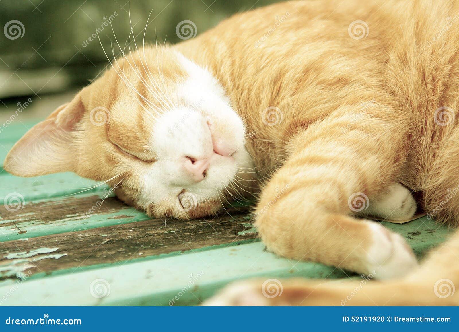 Кот спать обоснованно на общественном стенде