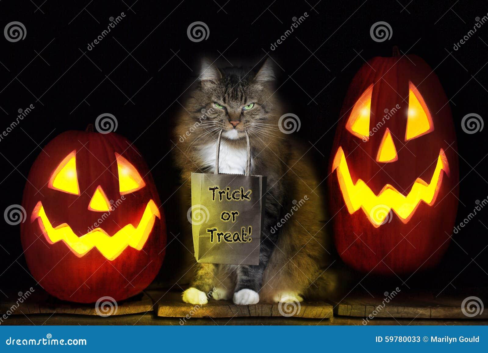 Кот с сумкой фокуса или обслуживания