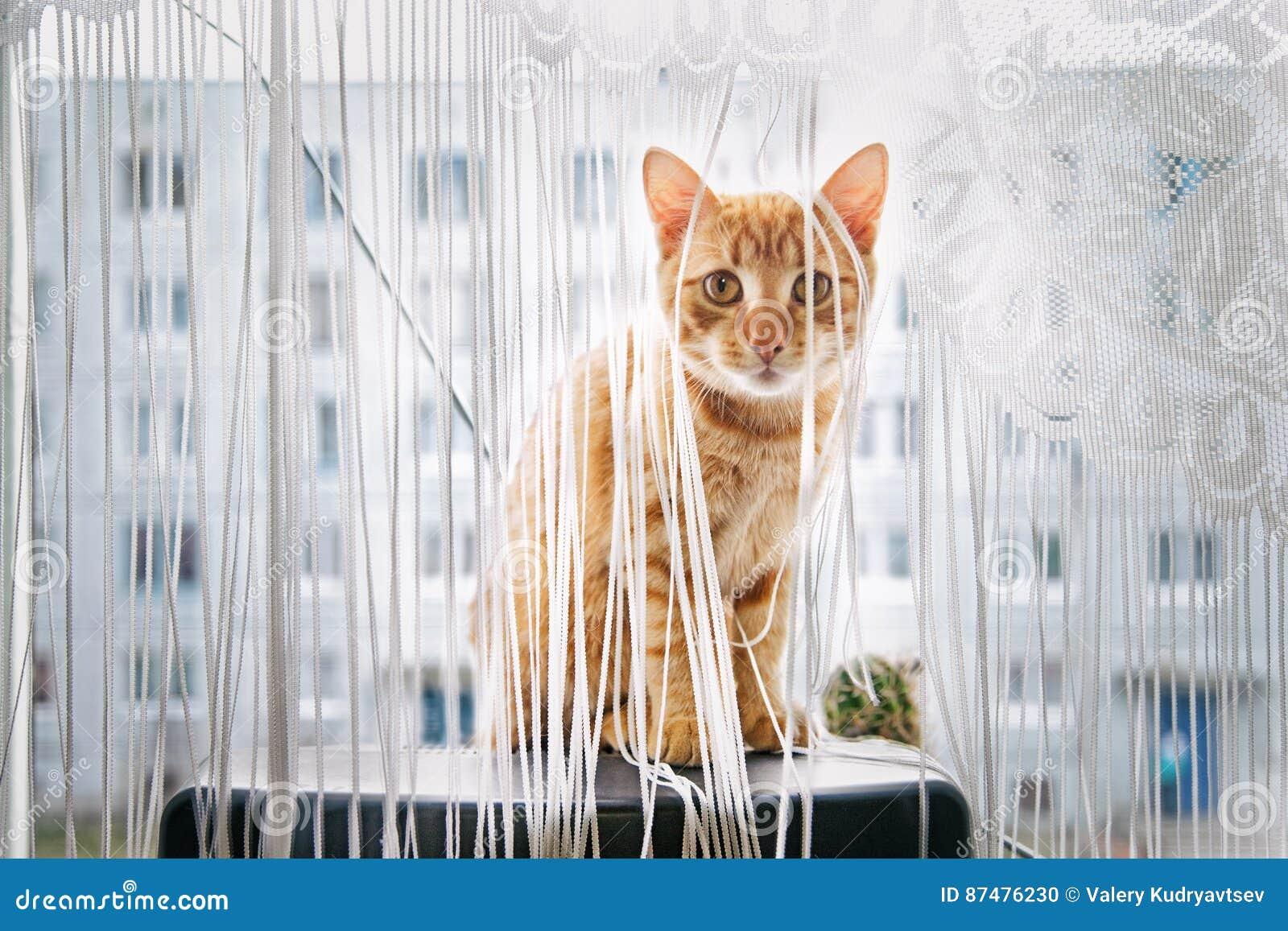 Кот телевизора сидя