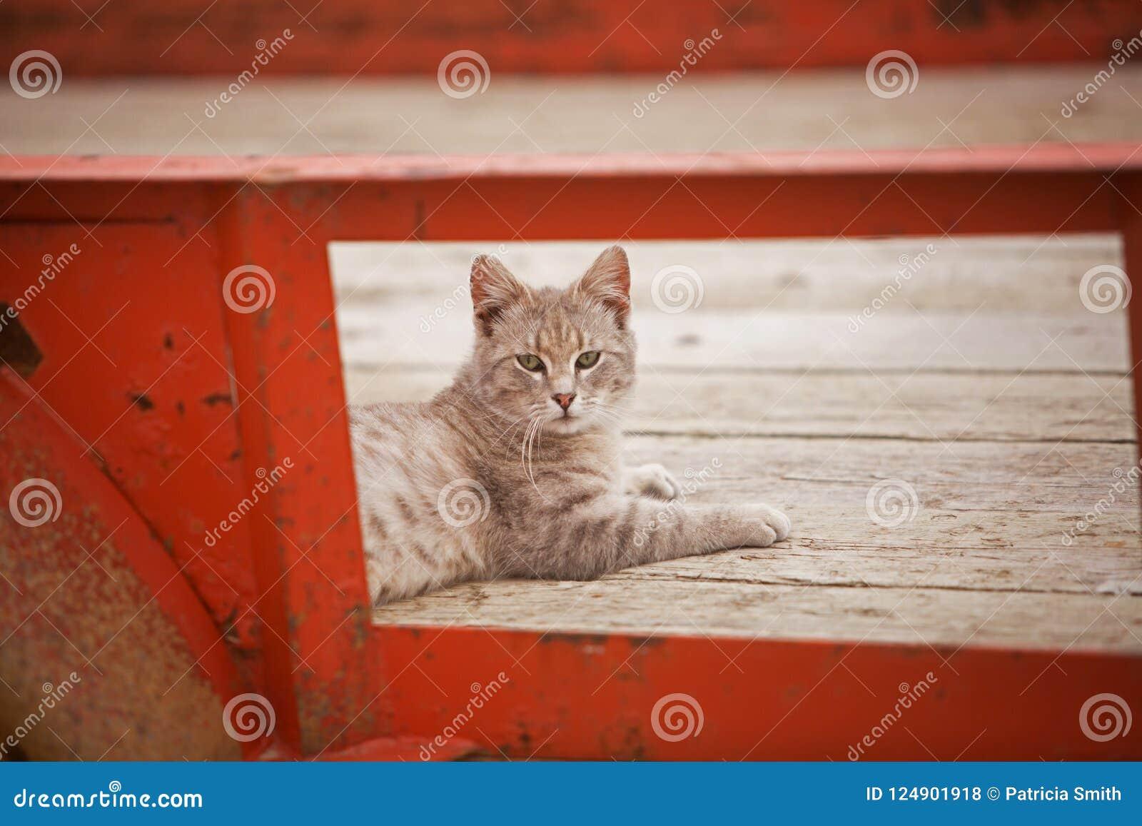 Кот фермы в трейлере