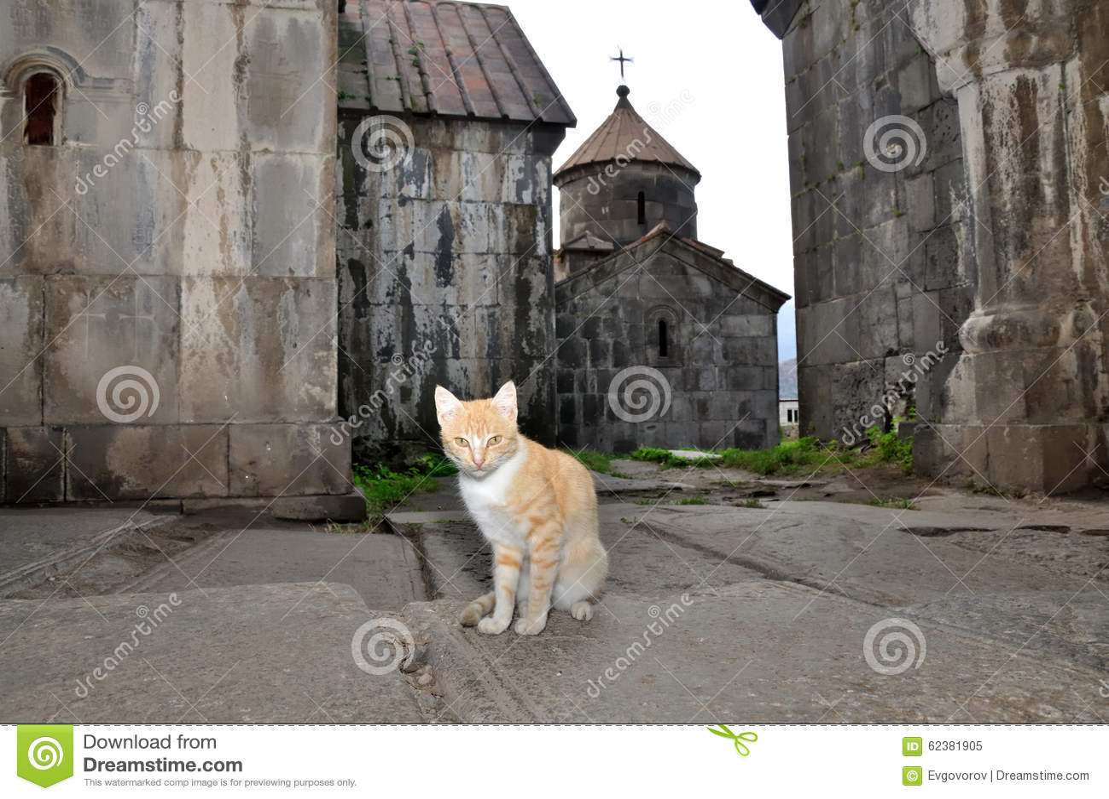 Коты армении