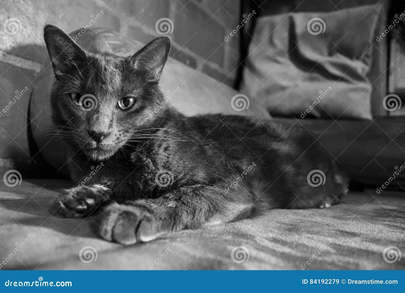 Y кота с