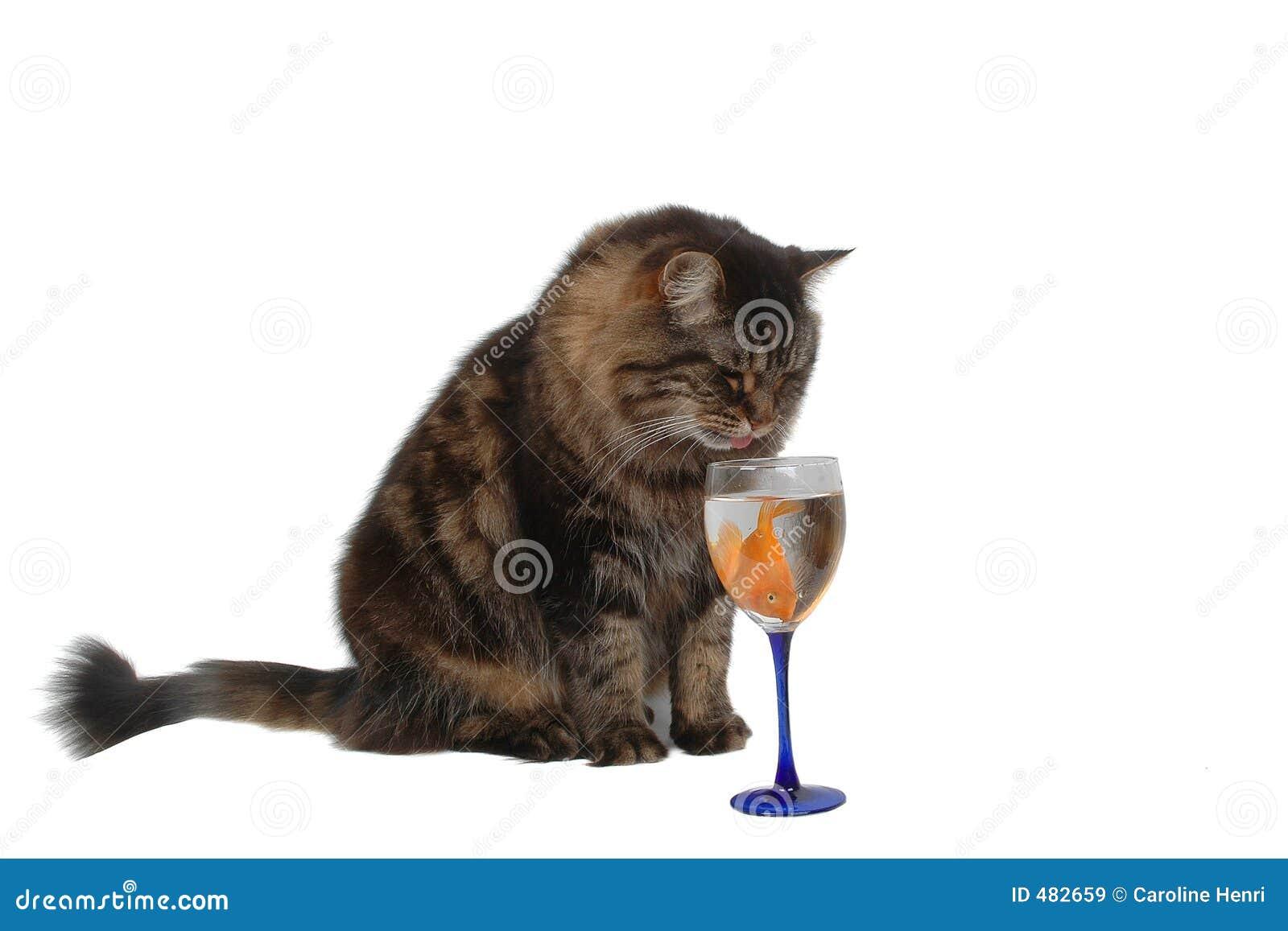 кот 4 голодный