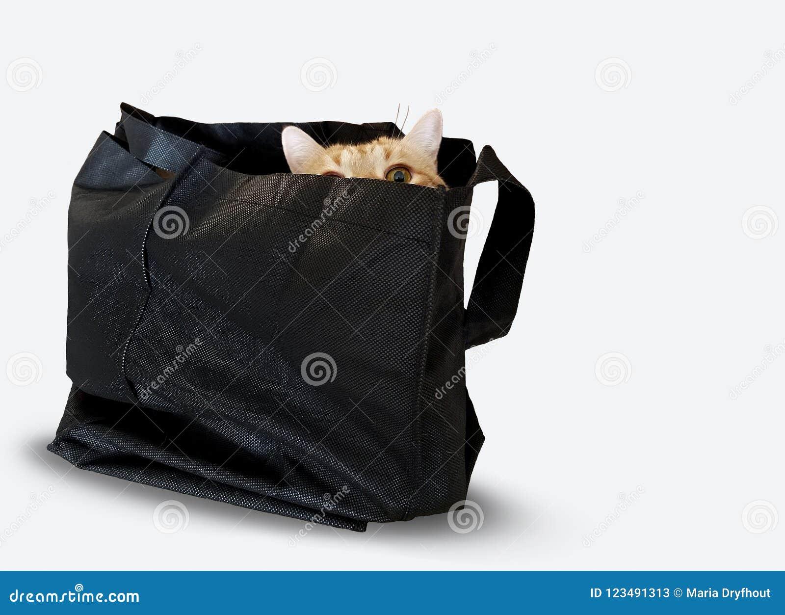 Кот Tabby в черном мешке на белизне
