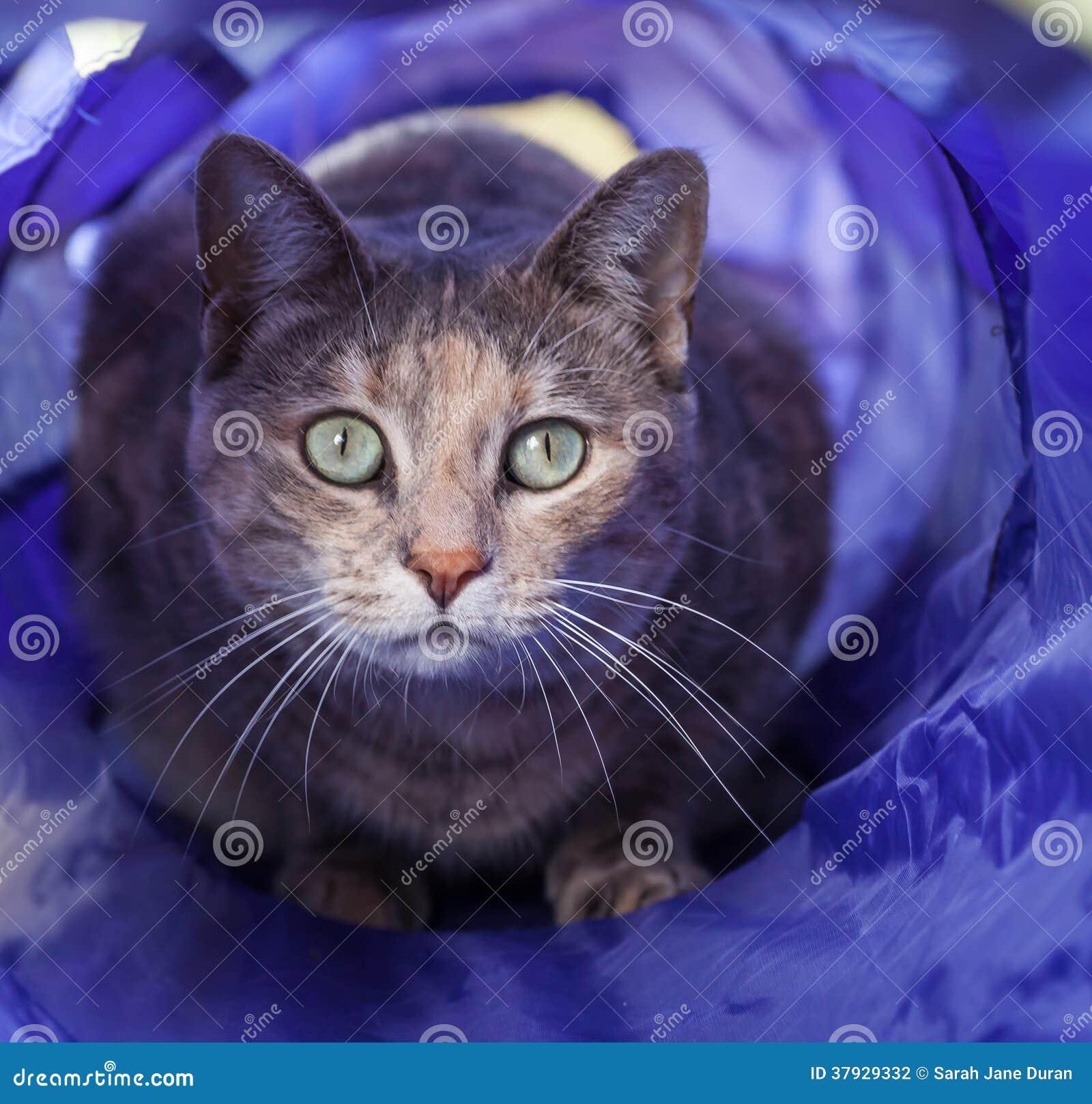 Кот Tortoiseshell вытаращить из тоннеля кота