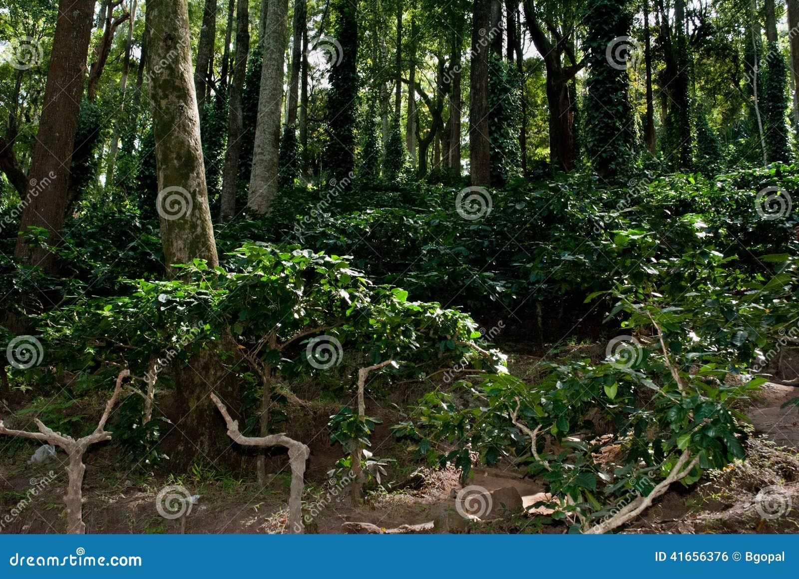 Кофейная плантация Ananthagiri