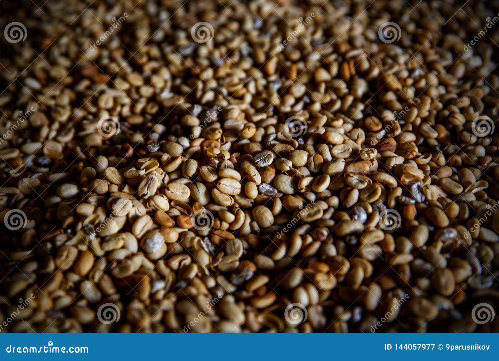 Кофейные зерна Luwak Взгляд сверху Легендарный кофе от Бали
