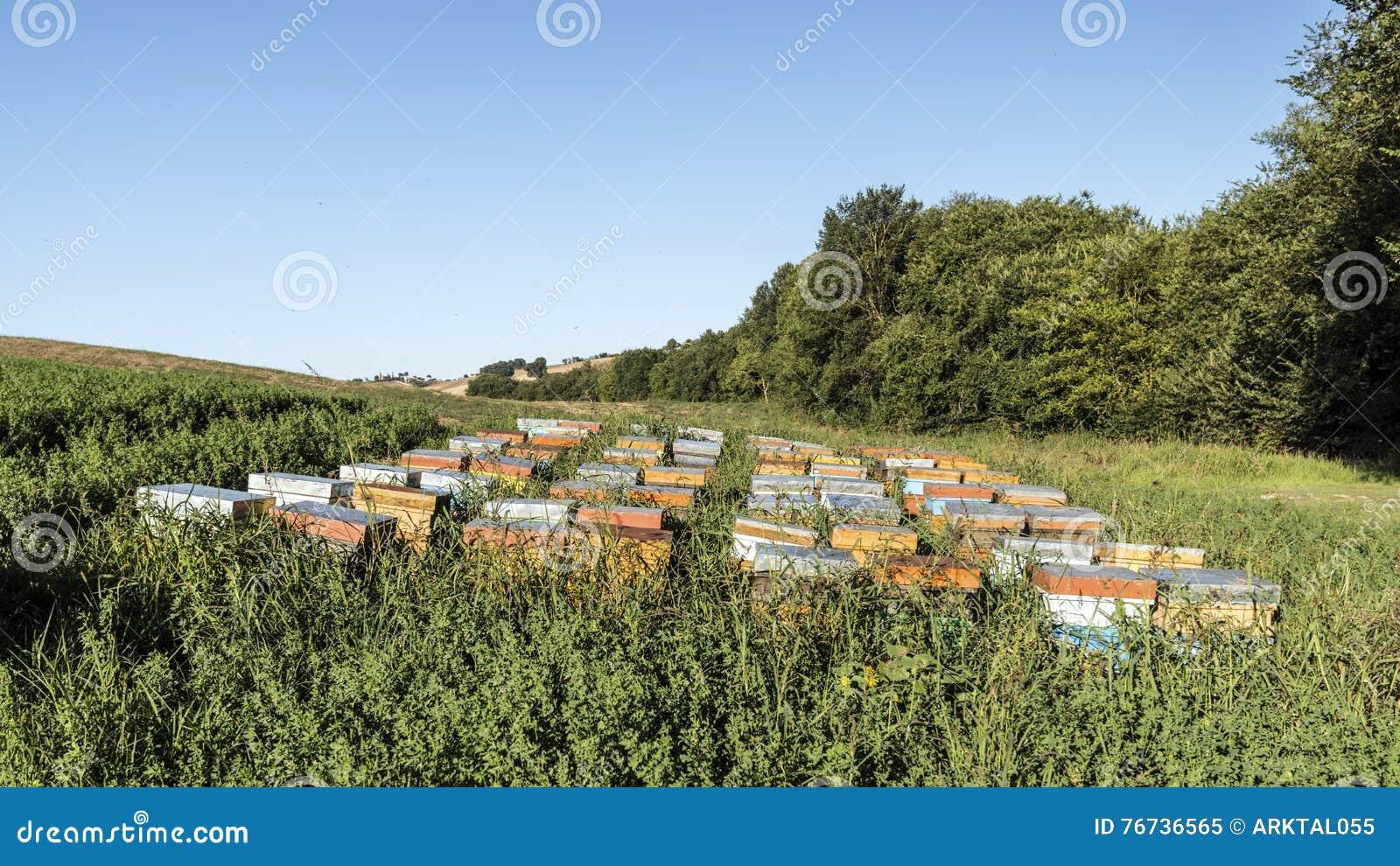 Кочевническое пчеловодство в полях