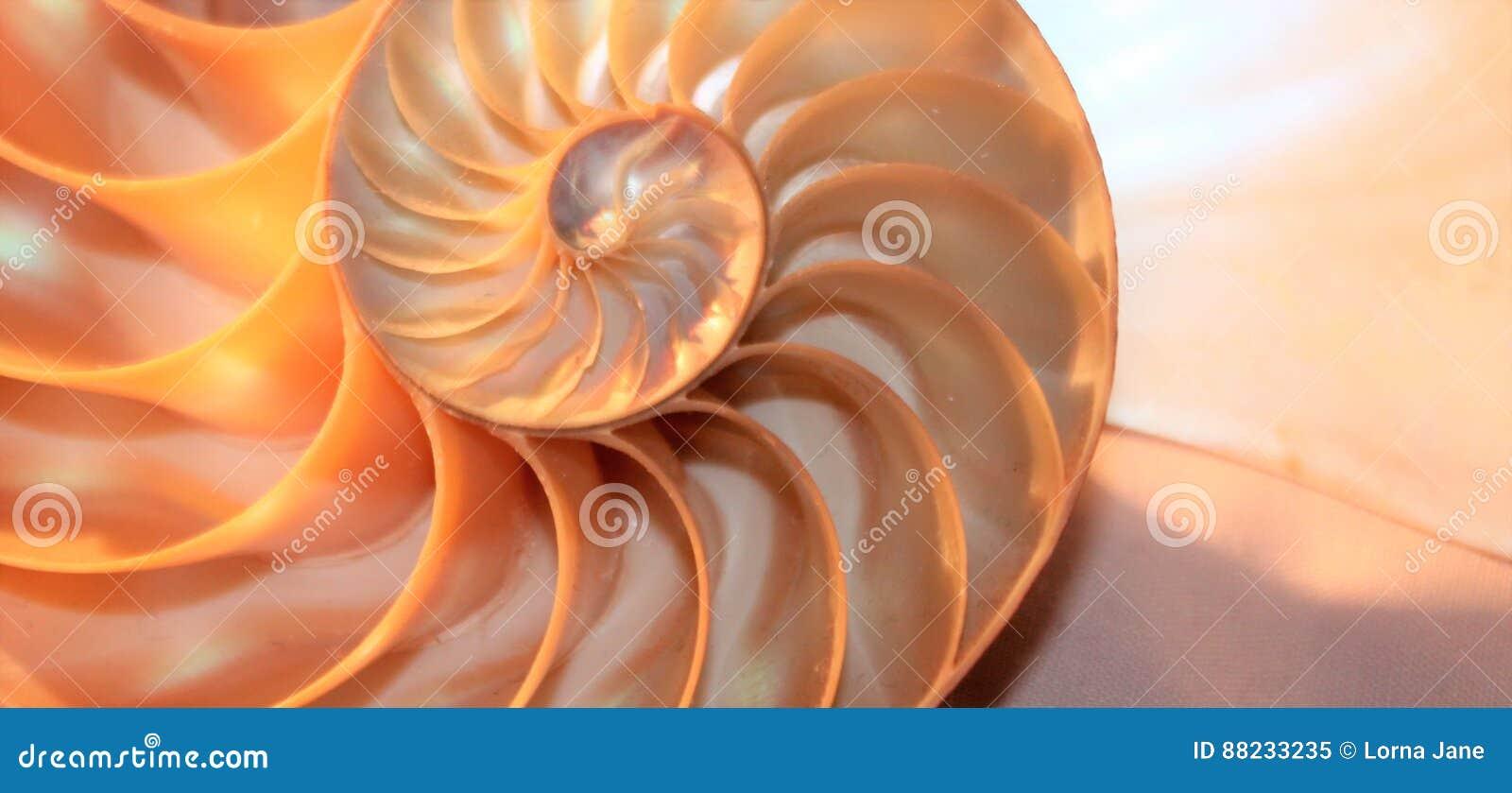 Коэффициент роста структуры спирали поперечного сечения симметрии Фибоначчи раковины Nautilus золотой