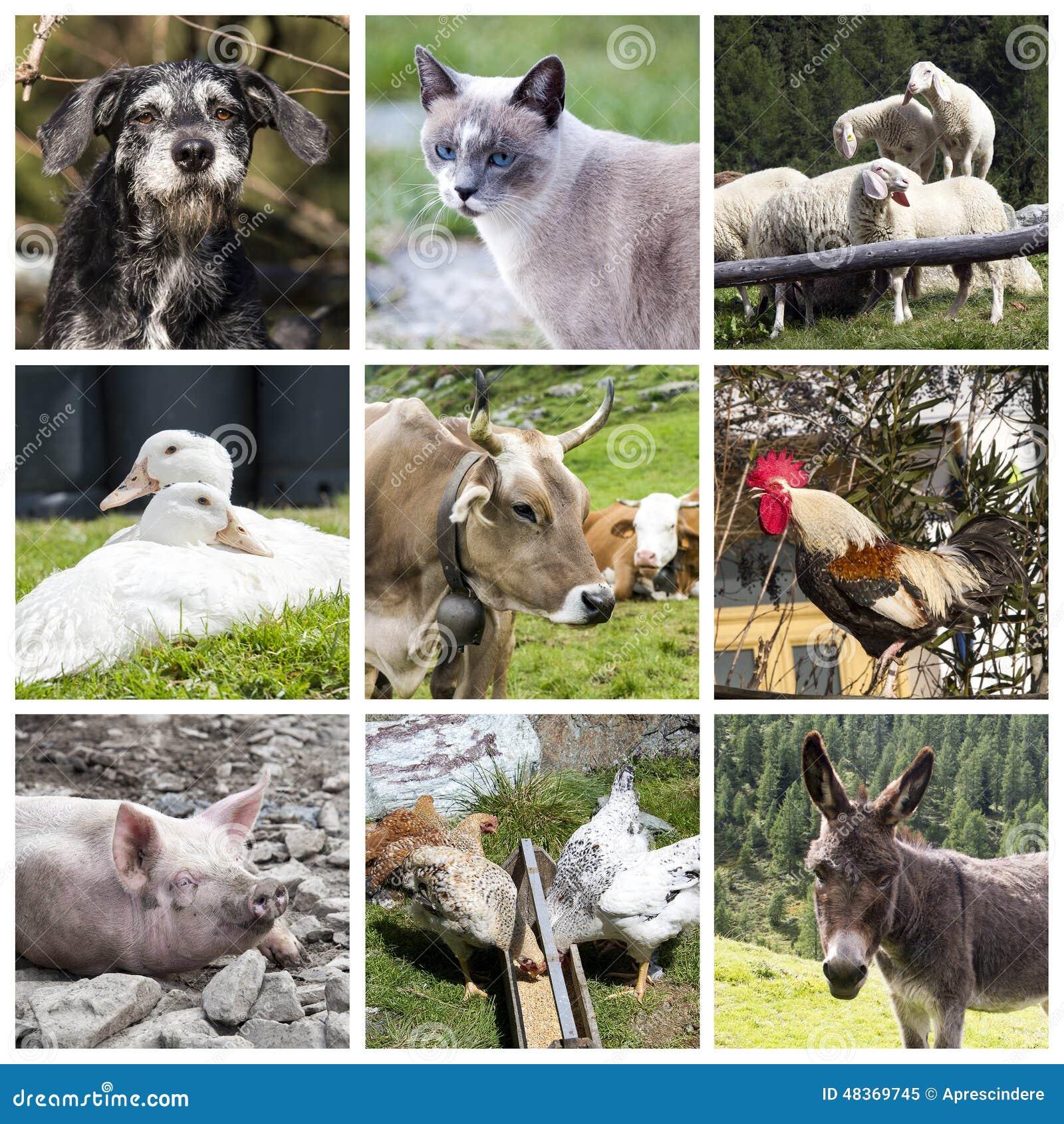 Коллаж животноводческих ферм