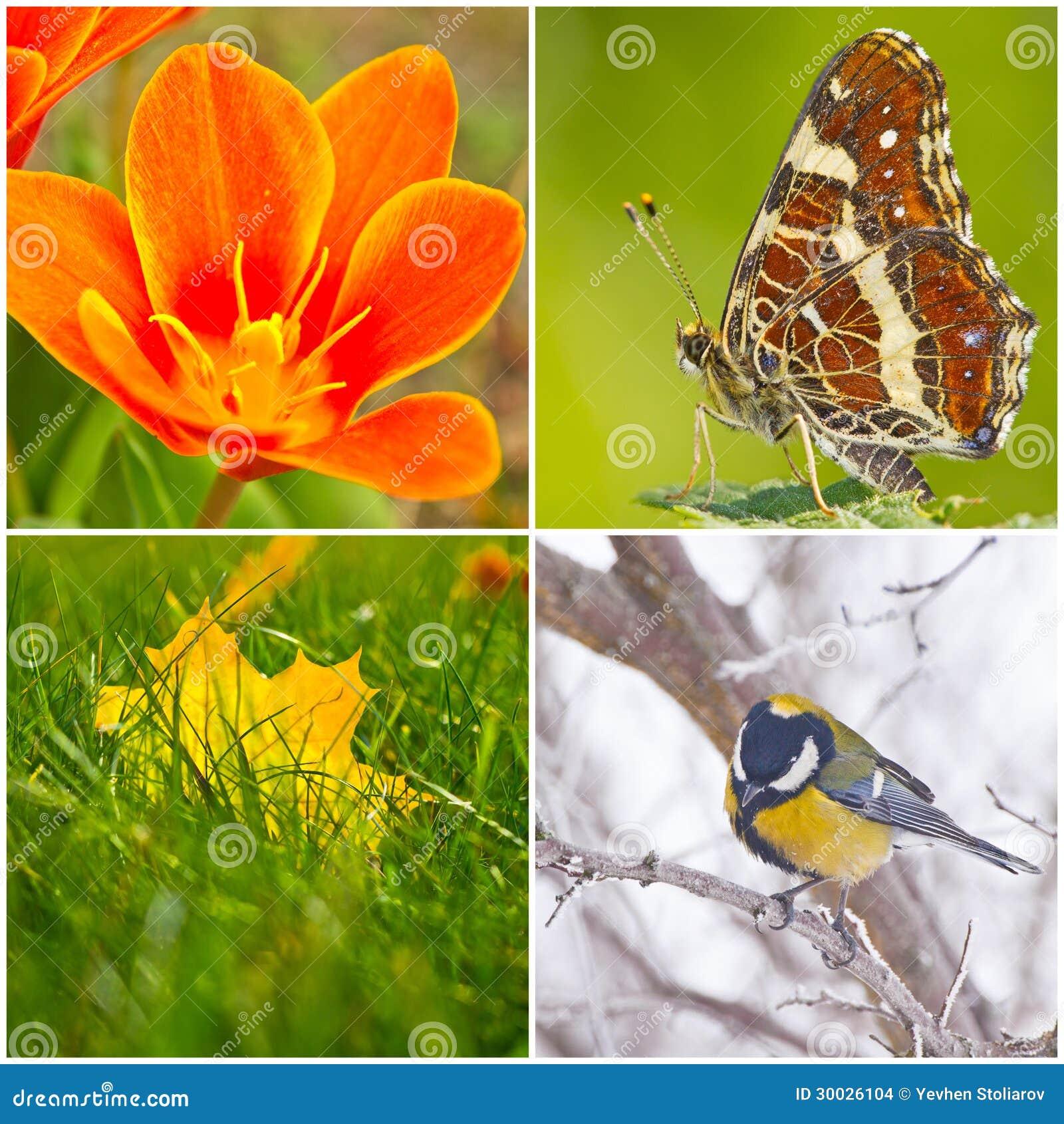 Цветы сезонов
