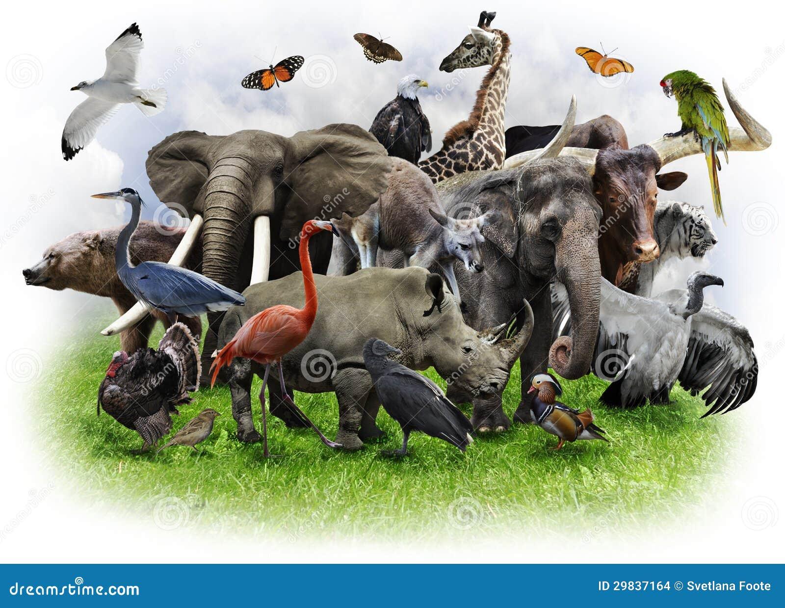 Коллаж животных