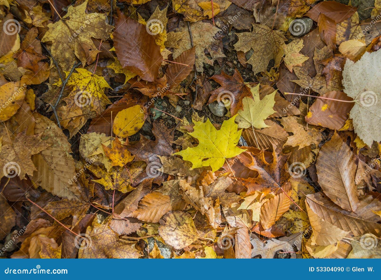 Коллаж пола леса листьев осени