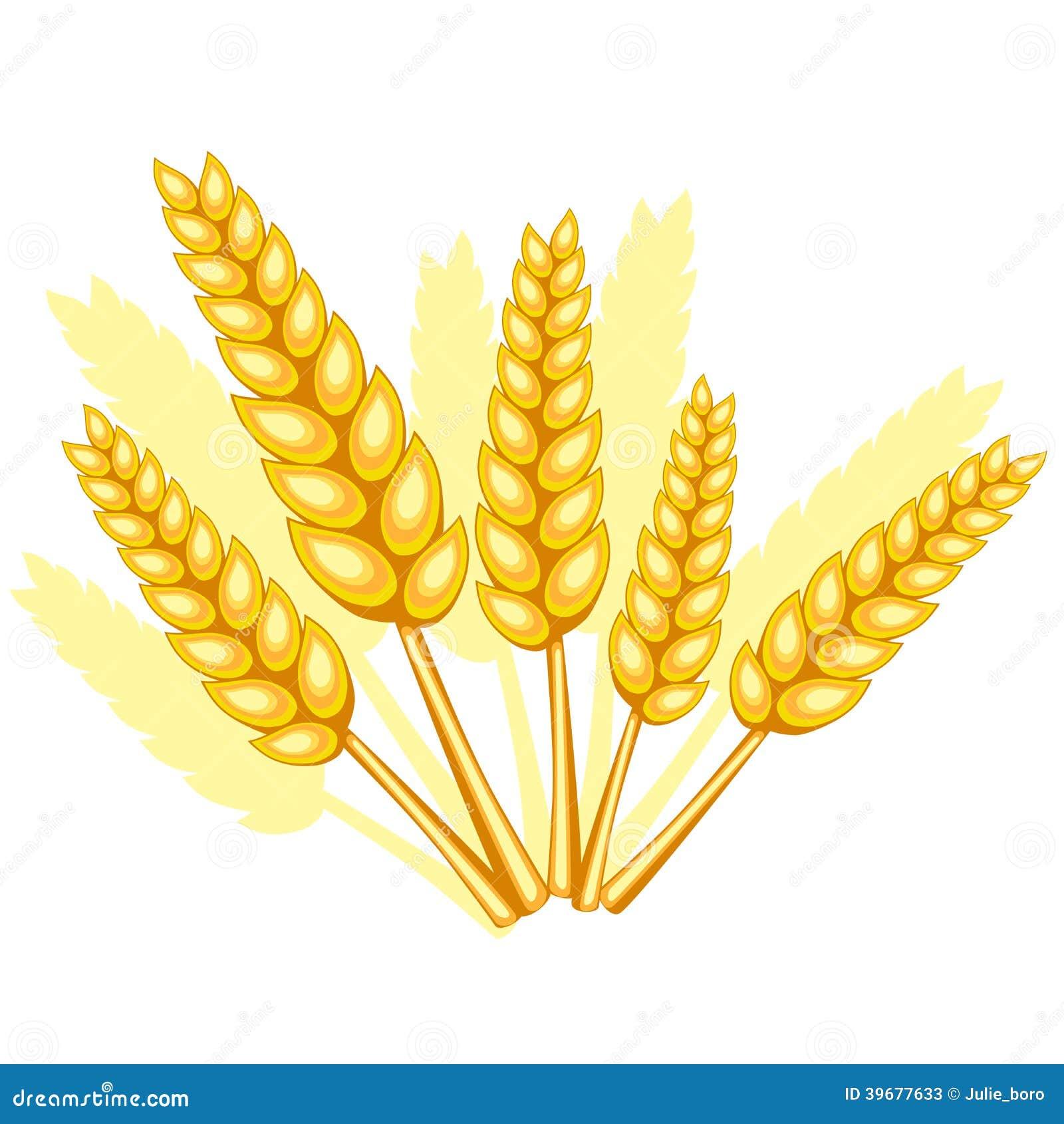 Поля пшеничные картинки