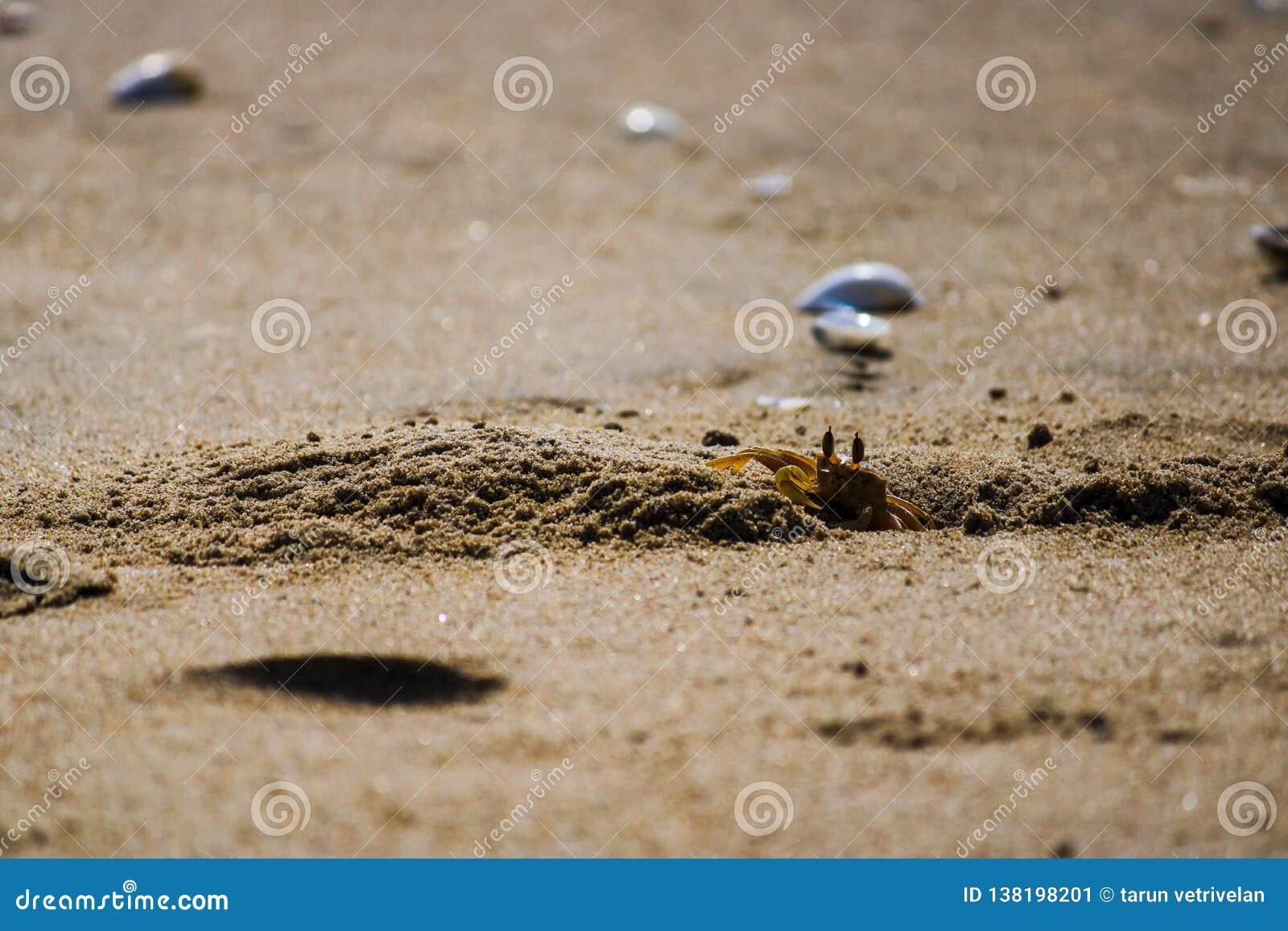 Краб в пляже