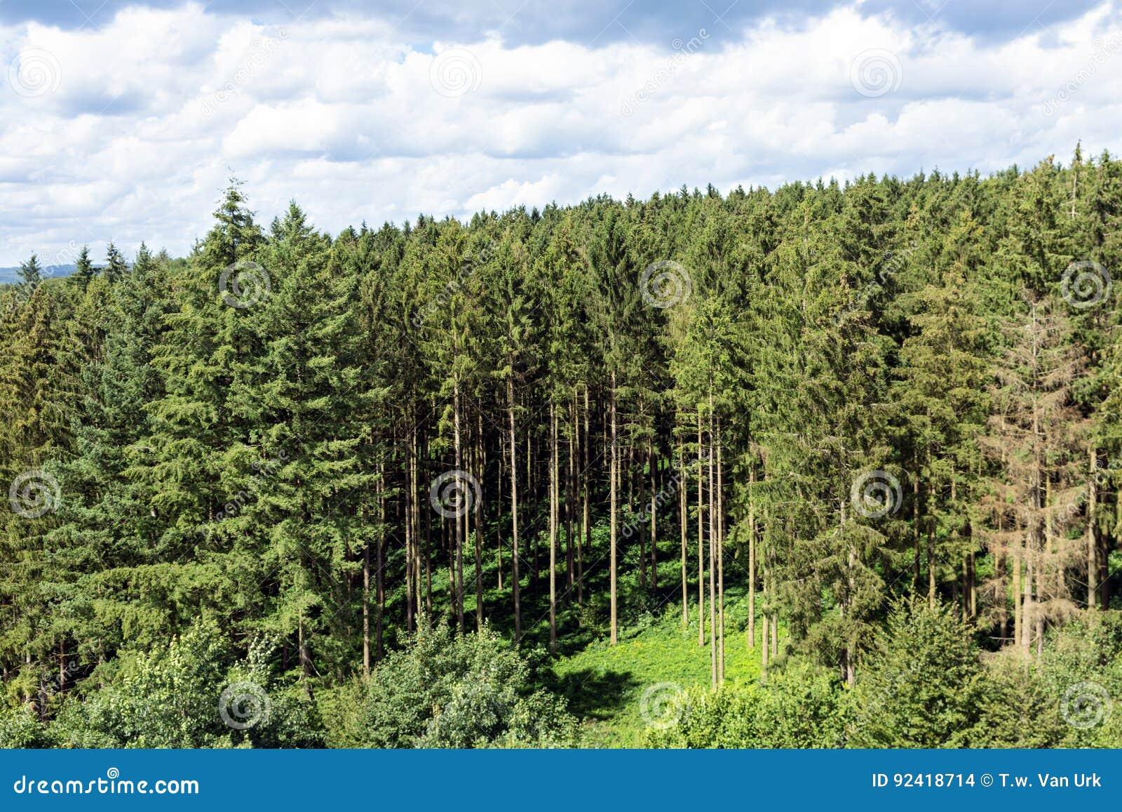 Край леса около бульона в Бельгии