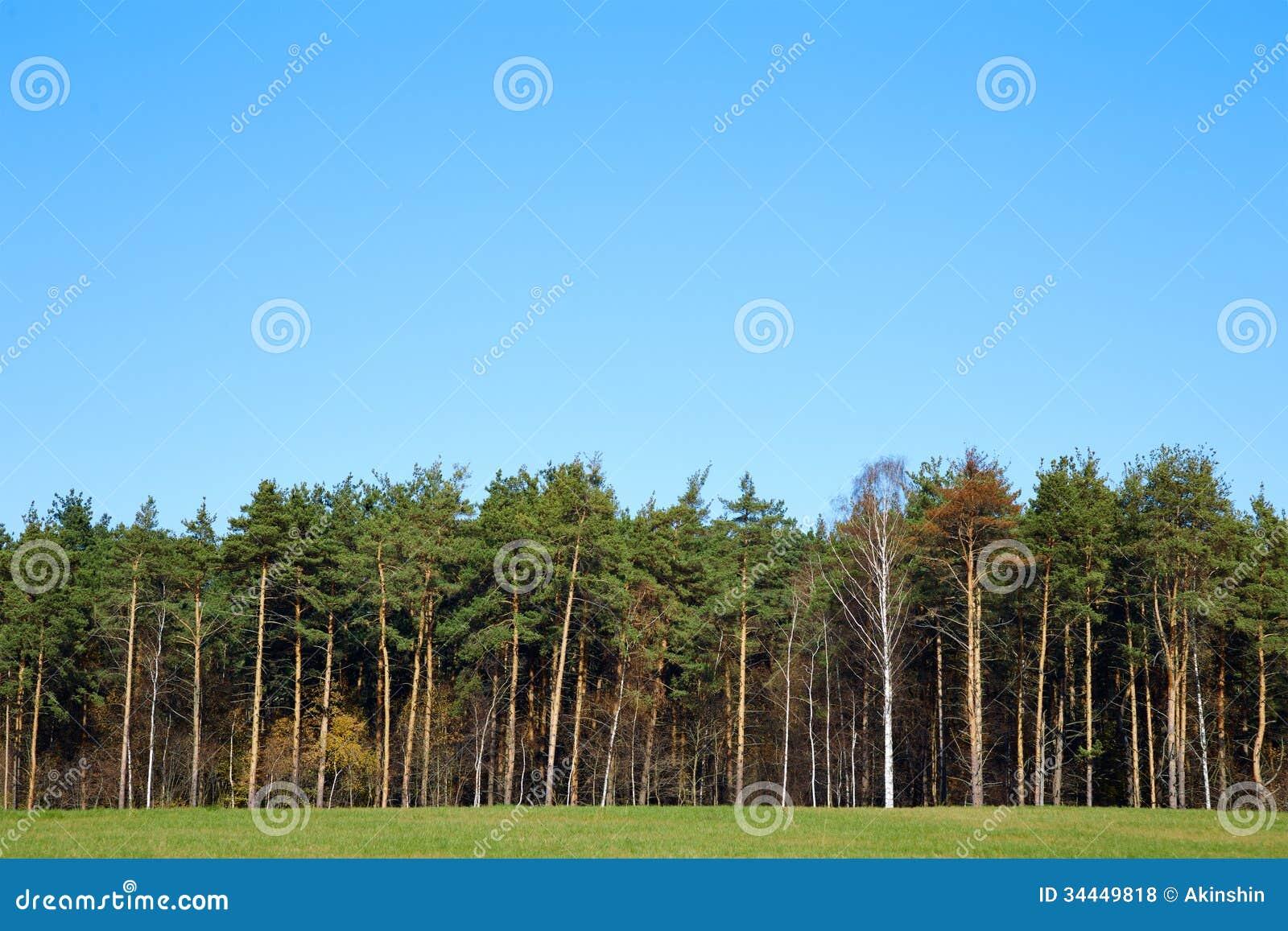Край леса