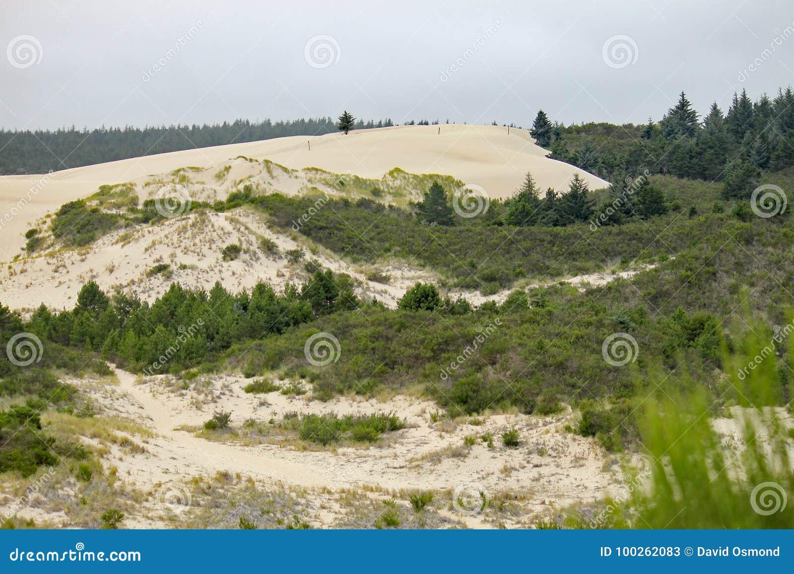 Край песчанных дюн Орегона