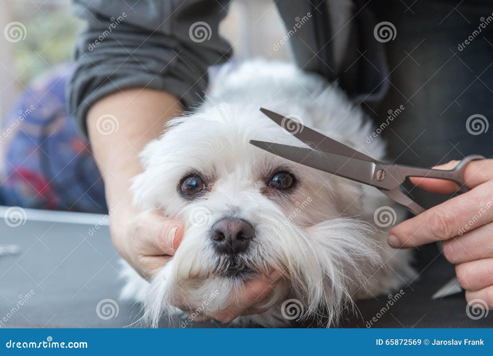 Край холить белой собаки