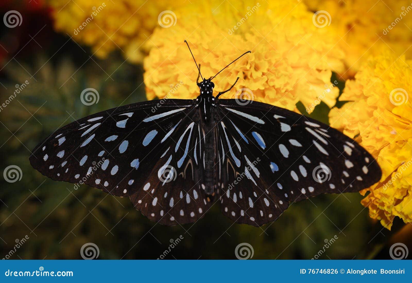 Вызвал ночную бабочку смотреть онлайн