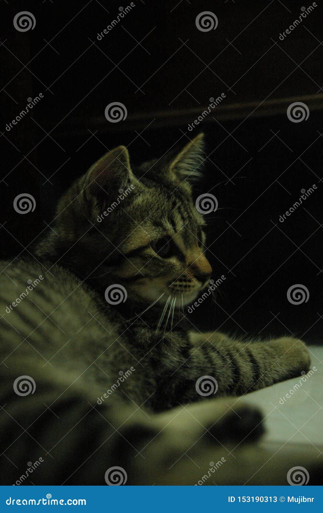Красивая домашняя кошка настолько милая - прелестное животное