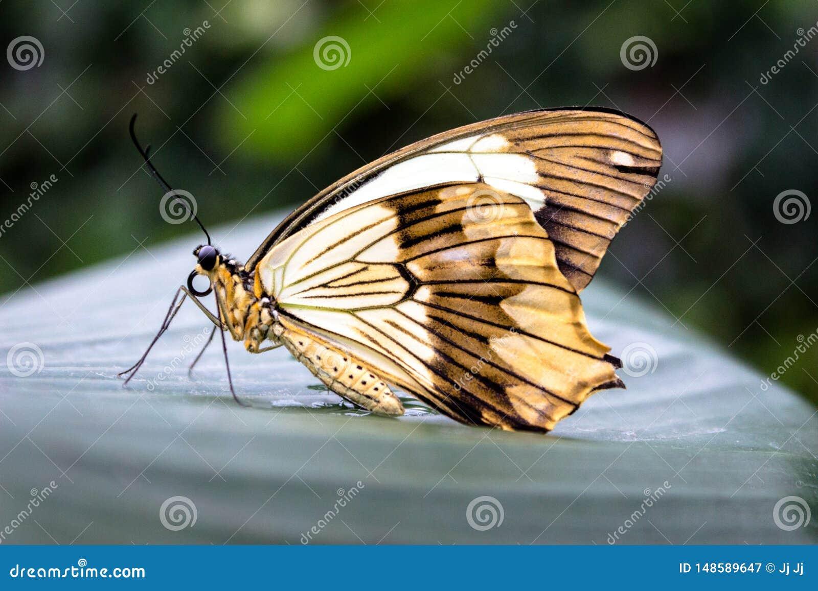Красивая желтая бабочка на лист