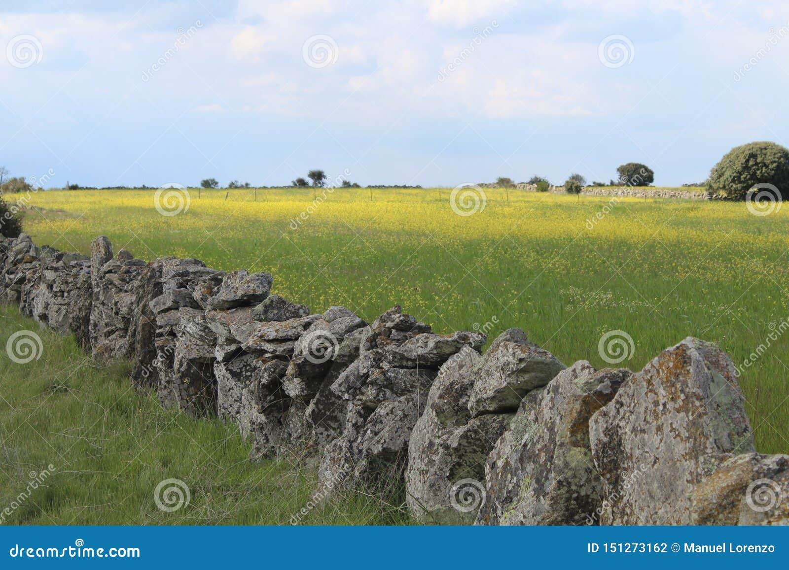 Красивая каменная стена которая отделяет поля и животные