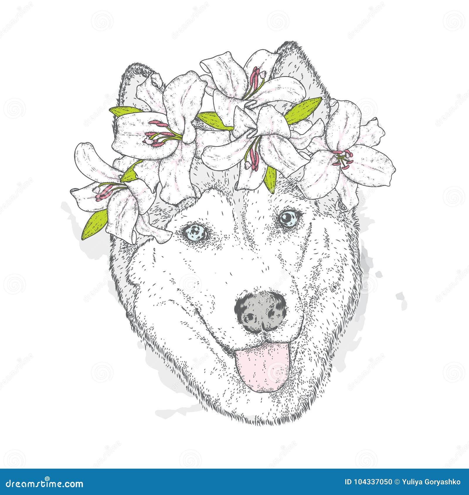 Красивая лайка в венке лилий Симпатичный щенок в венке цветка Собака родословной также вектор иллюстрации притяжки corel