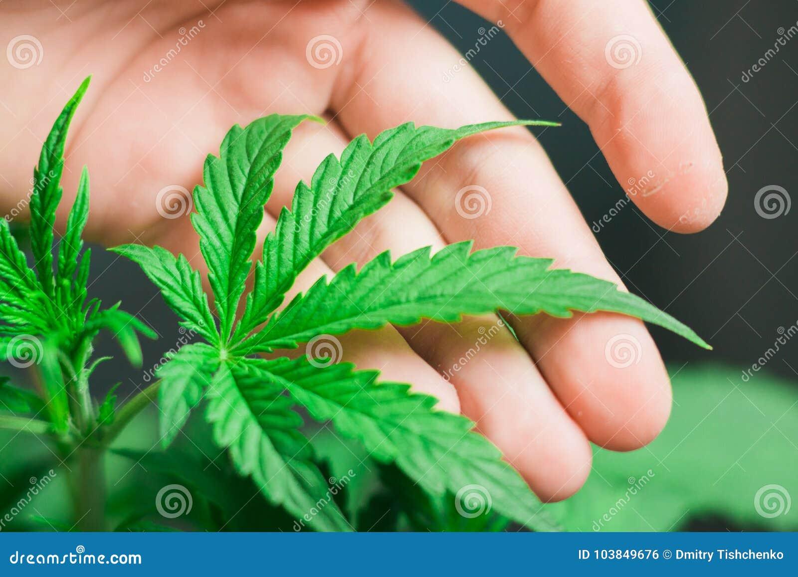 Как красиво написать конопля марихуаны при беременности