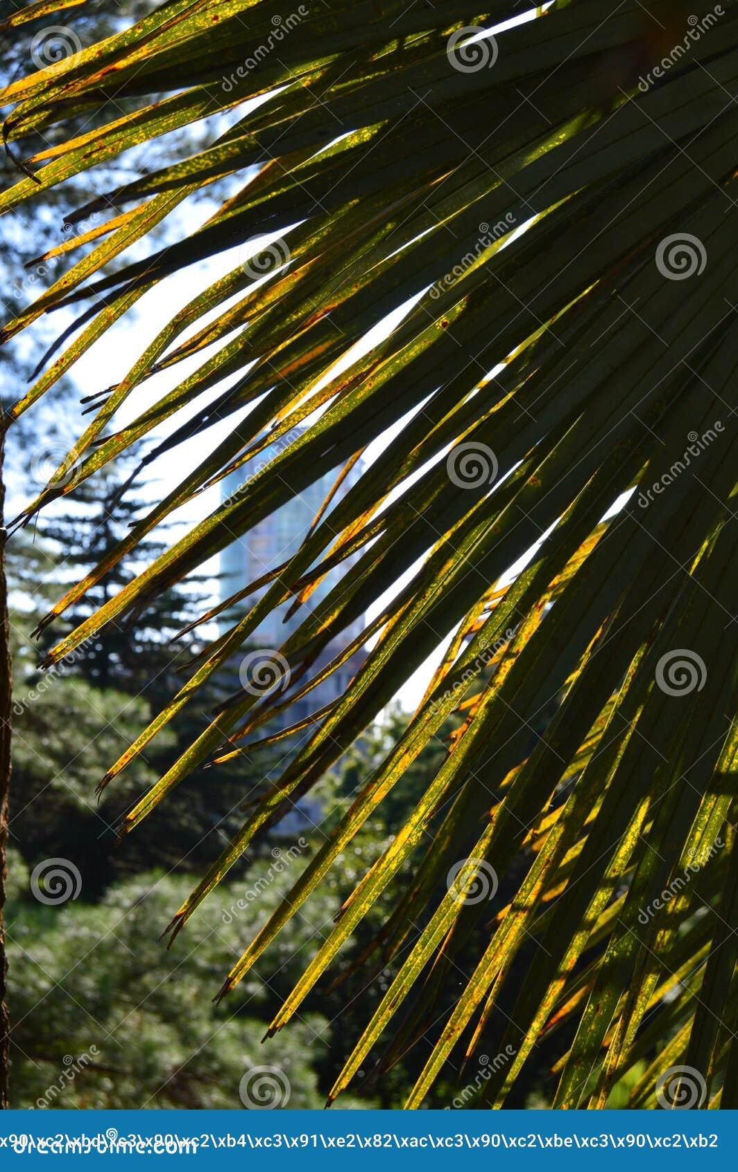Красивая пальма в тропиках на предпосылке солнечного света