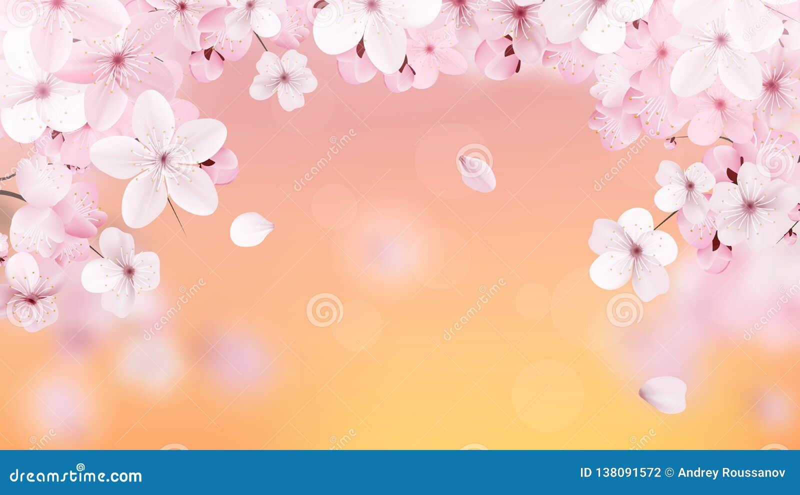 Красивая печать с цвести светом - розовые цветки и место Сакуры для текста Вишня на предпосылке захода солнца реалистическо