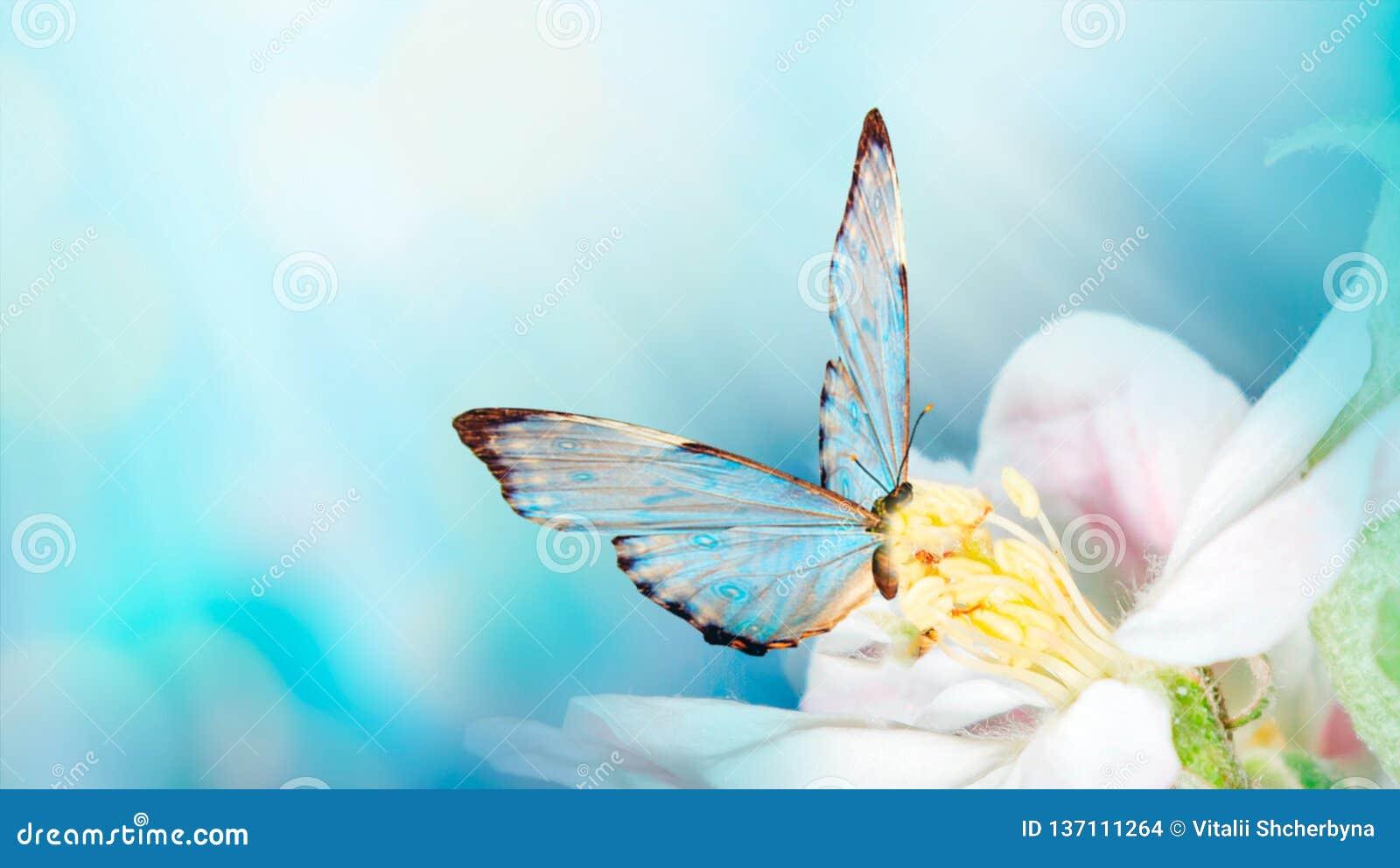 Красивая предпосылка весны с бабочкой и цветком Космос для текста Предпосылка шаблона границы лета весны флористическая панорамно