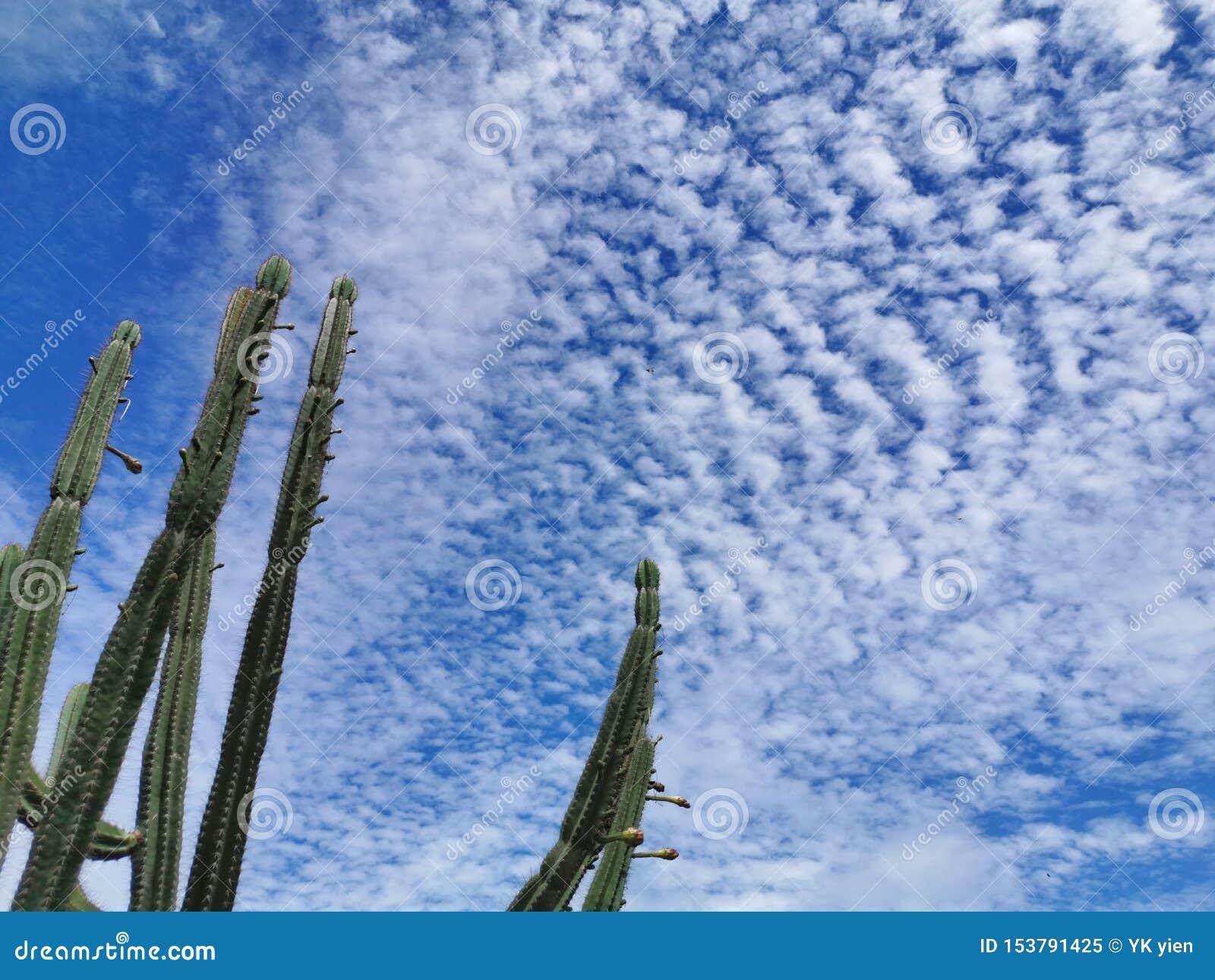 Красивая предпосылка голубого неба