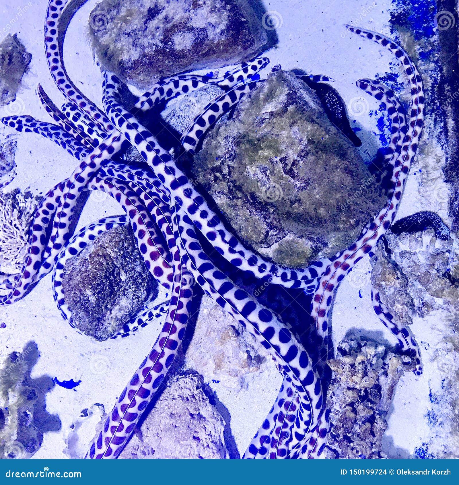 Красивая реальная рыба плавает среди каменных кораллов в чистом стеклянном прозрачном аквариуме