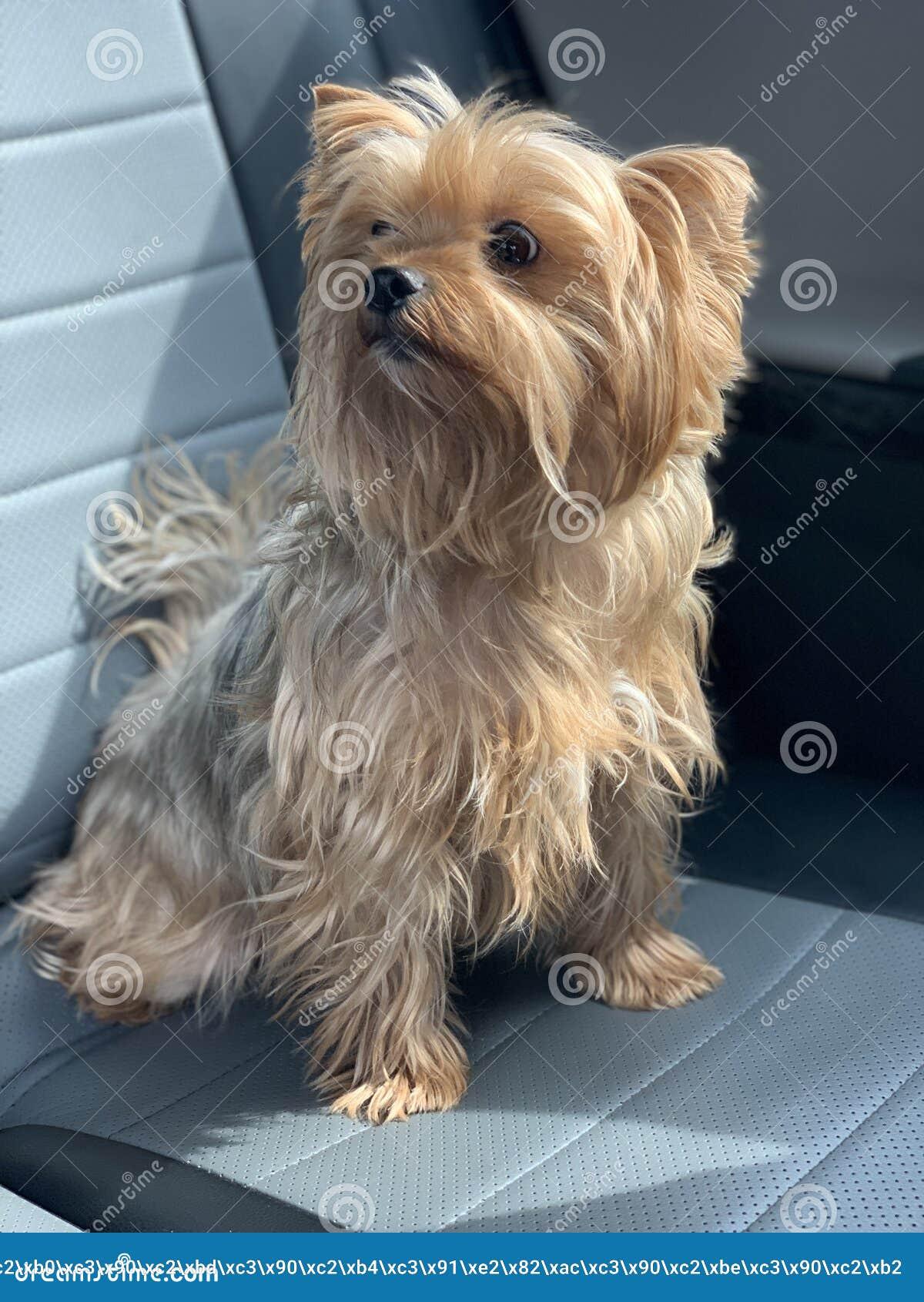 Красивая собака в автомобиле