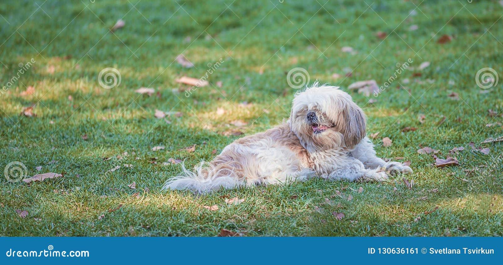 Красивая собака лежа на зеленой траве